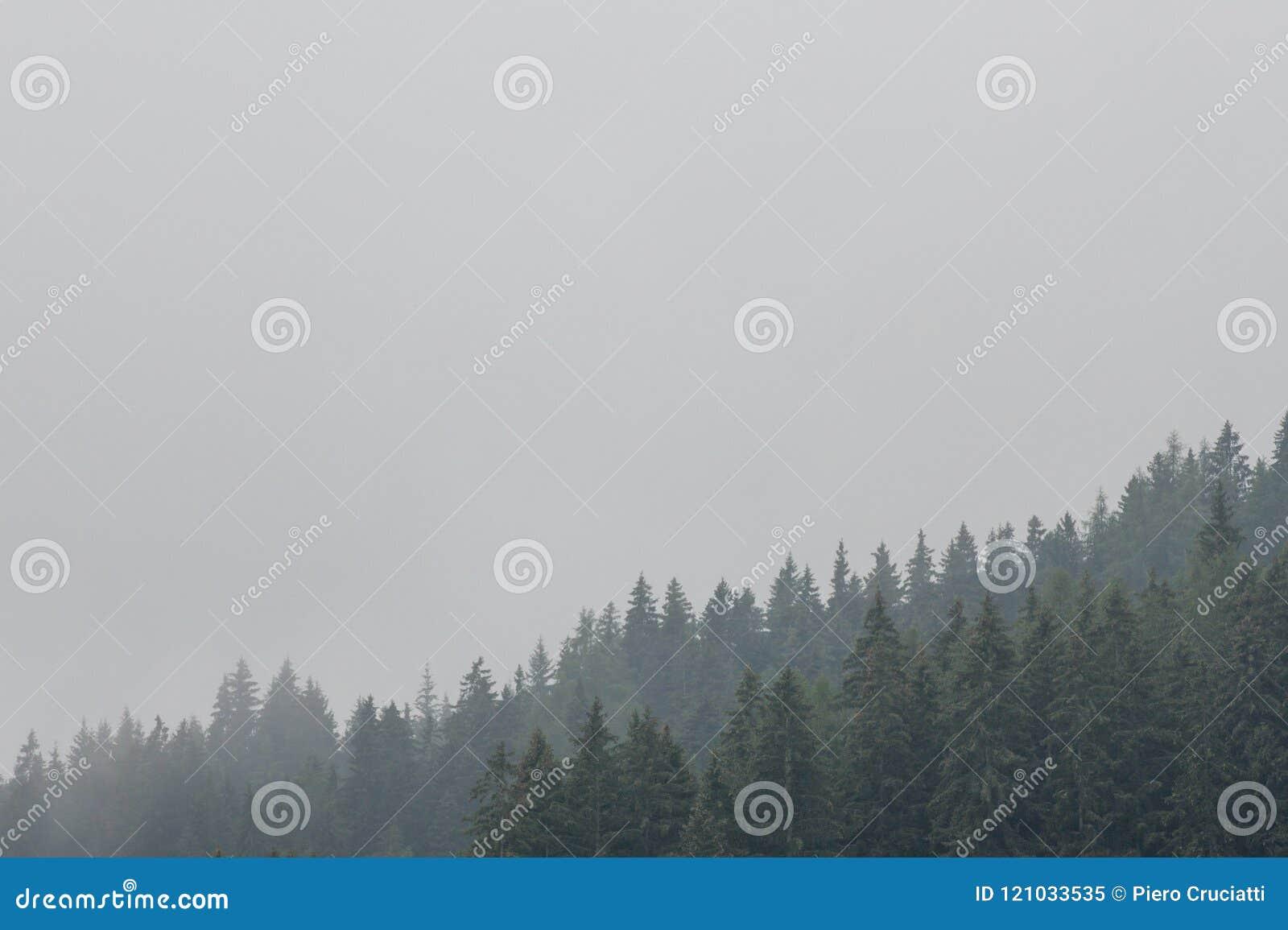 Nostalgische mening van altijdgroen naaldbos met lage wolken en mist