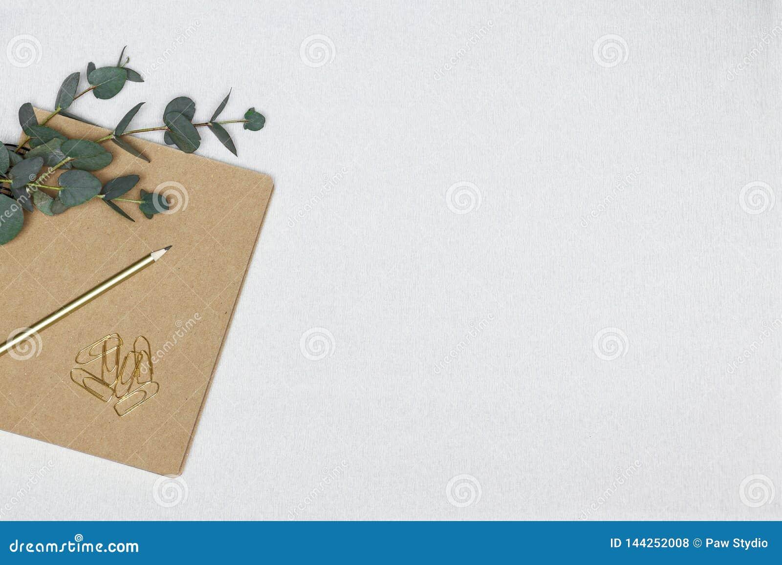 Nota, ramo dell eucalyptus, graffette su un fondo bianco
