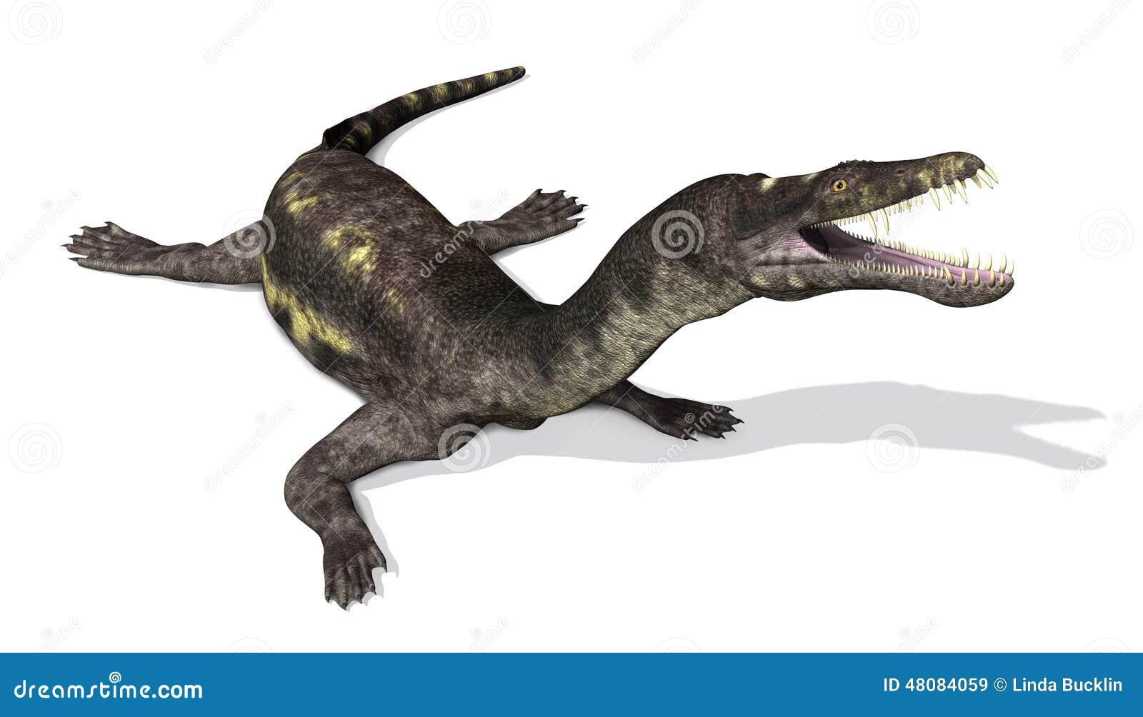 Nothosaurus :史前海洋爬行动物