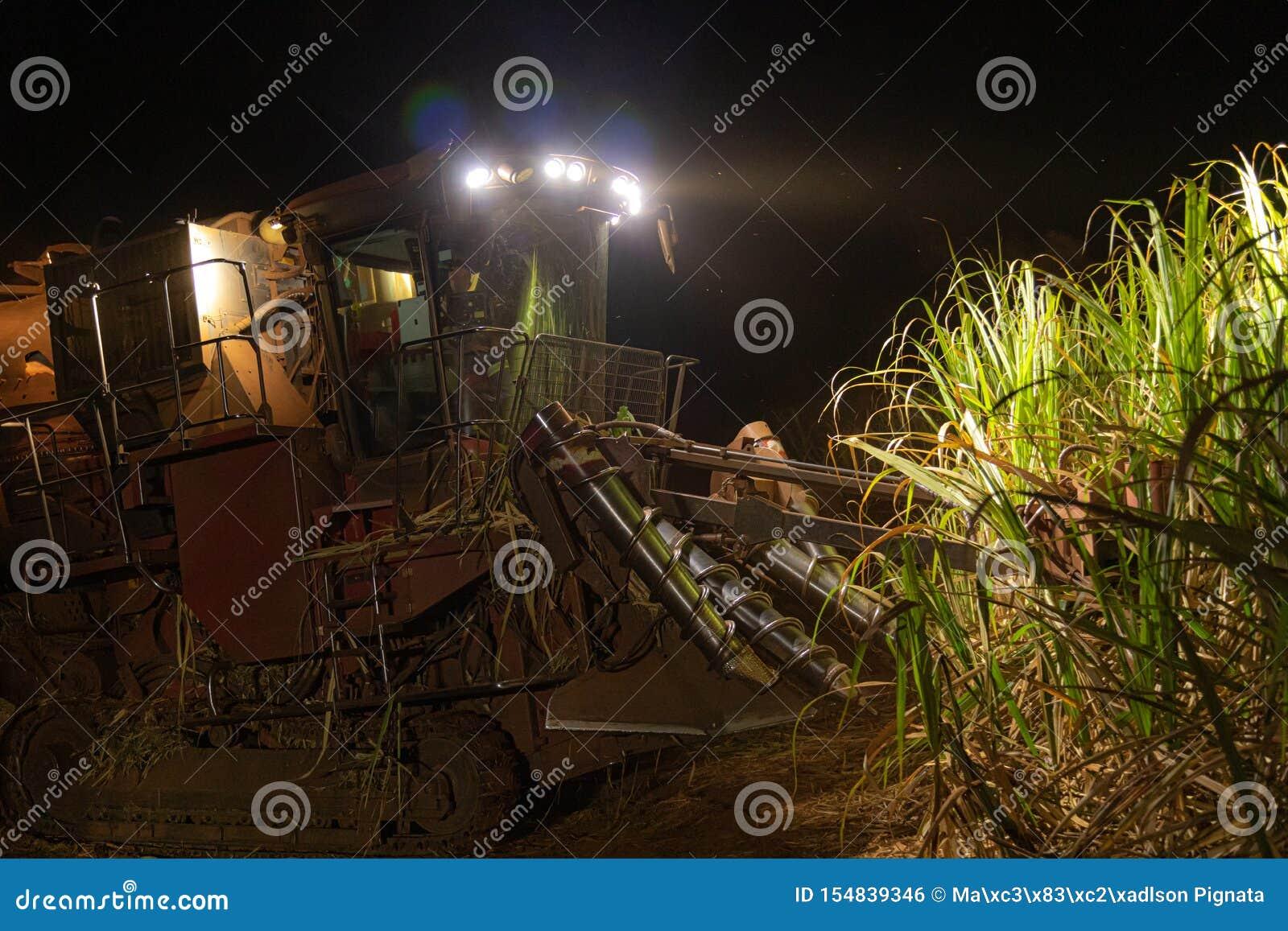 Notte della piantagione più hasvest della canna da zucchero