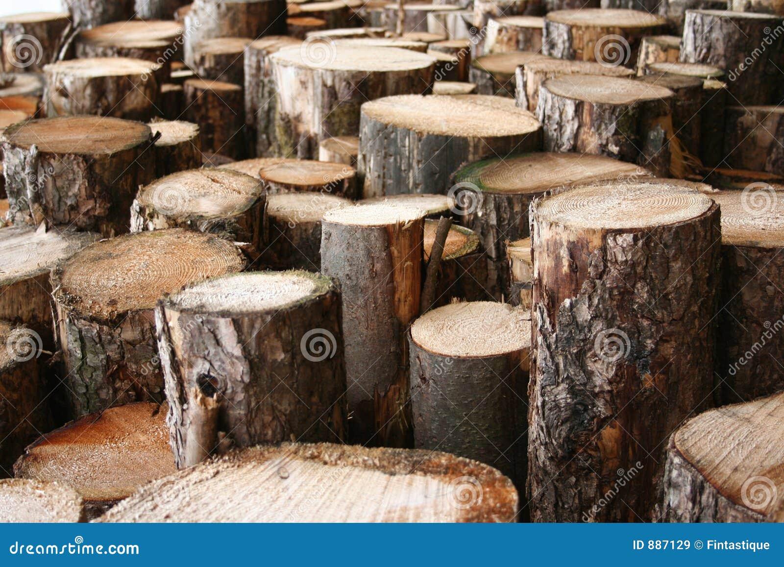 Notuje drewna