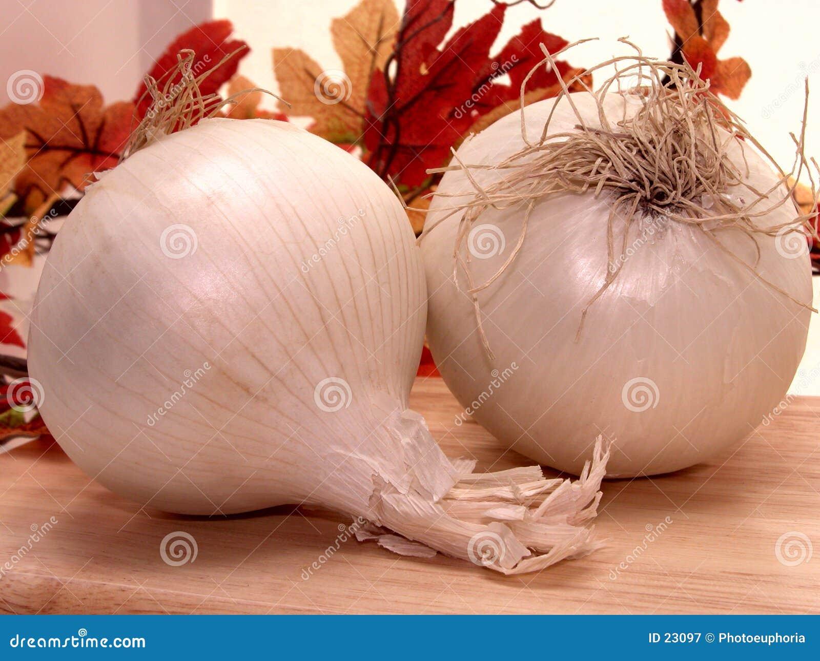 Nourriture : Oignons blancs