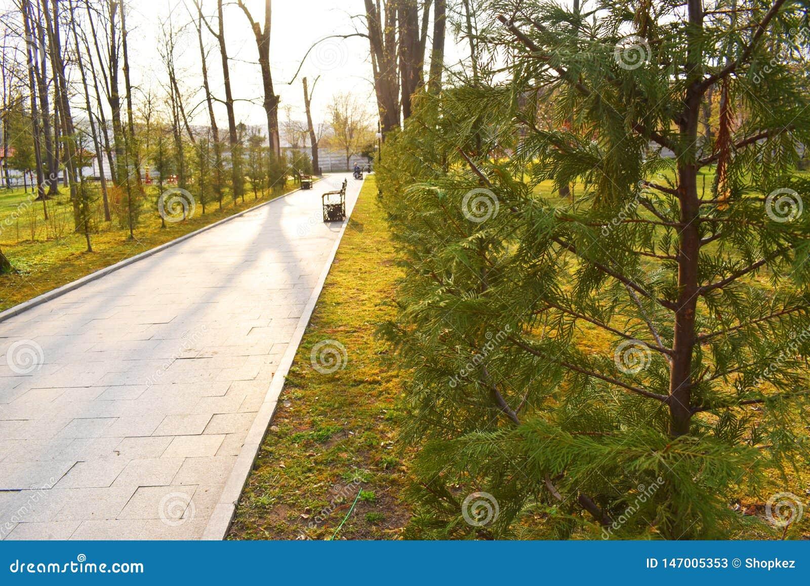 Nouvelle voie et belle voie d arbres pour courir ou marcher et faire un cycle pour d?tendre en parc sur le champ d herbe verte en