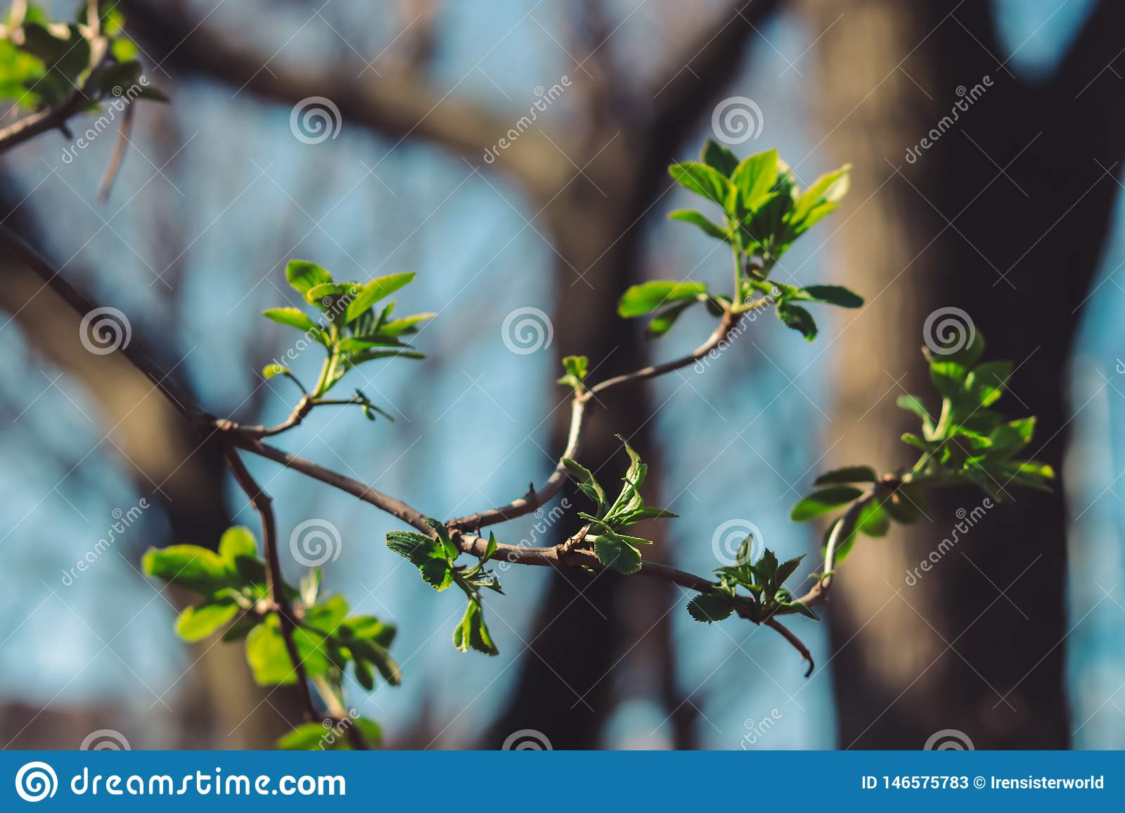 Nouvelles feuilles sur un arbre