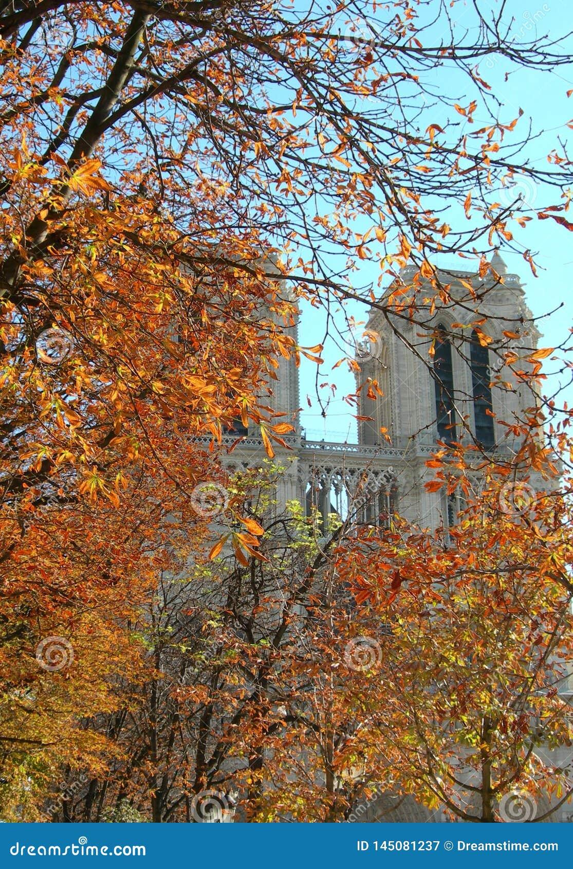 November i Paris, Notre Dame