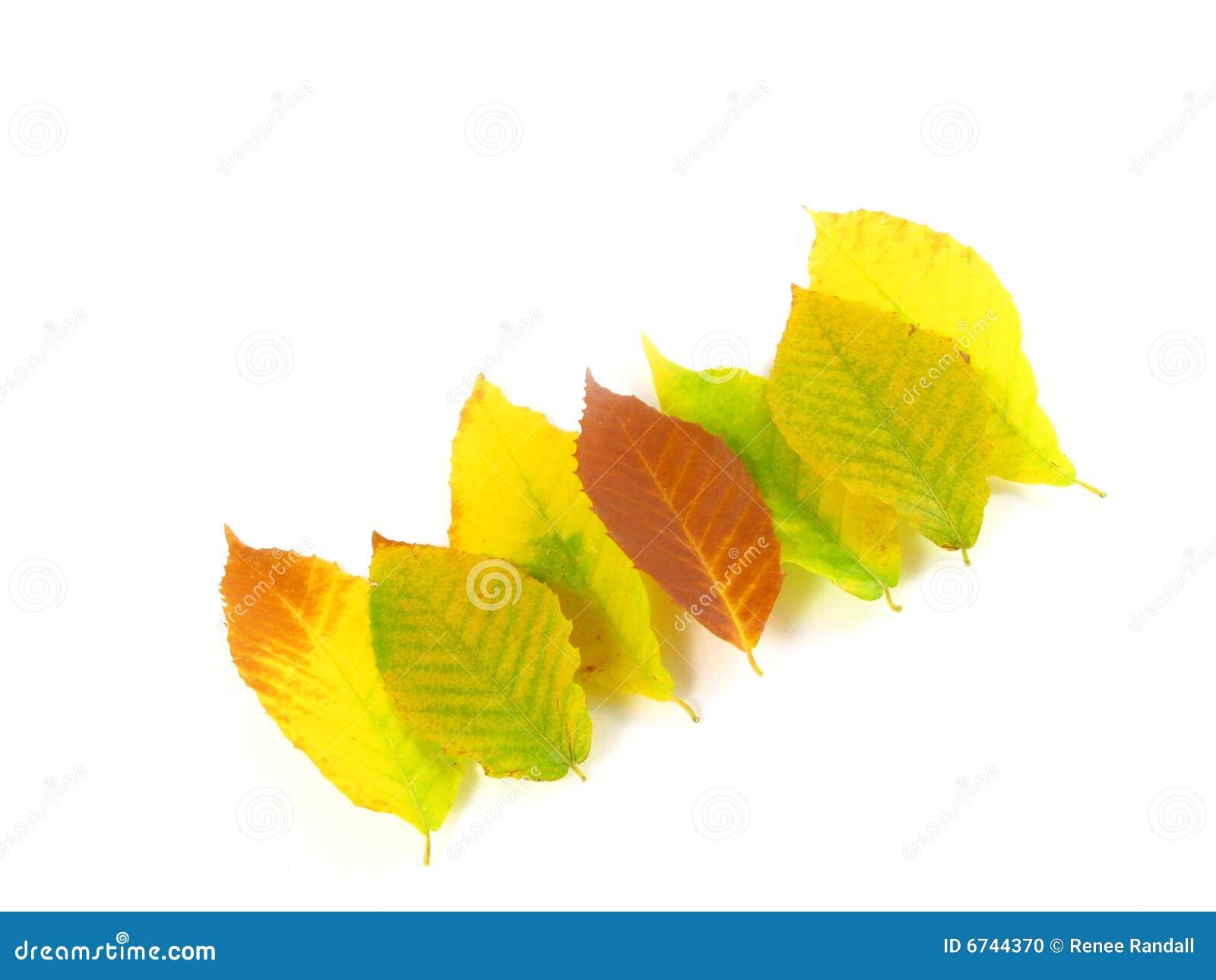 November October Autumn Leaf Foliage Fall Leaves