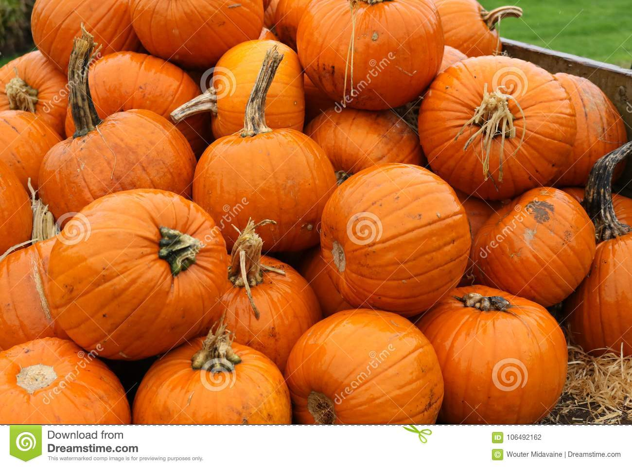 Now? how many pumpkins did you need?