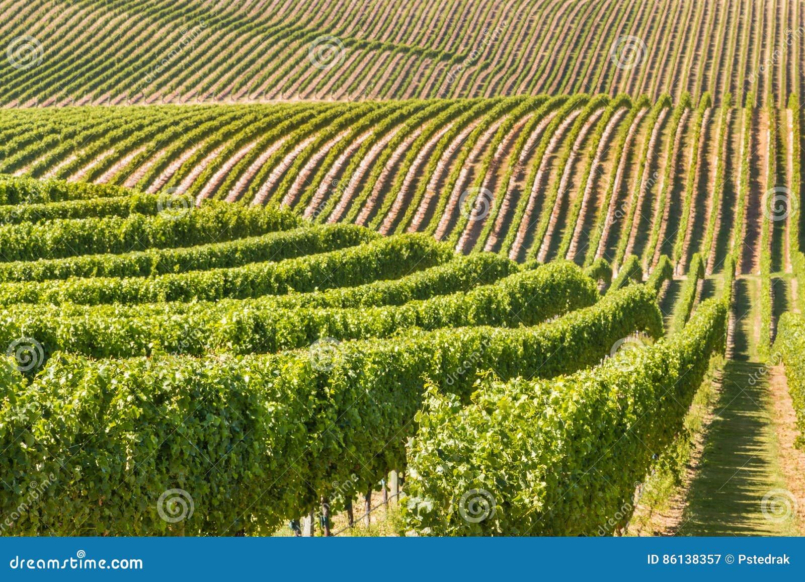 Nowa Zelandia winnica na tocznych wzgórzach
