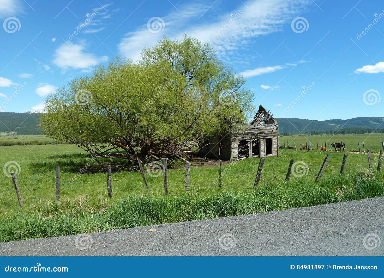 Nowe łąki, Idaho Dziejowa stajnia
