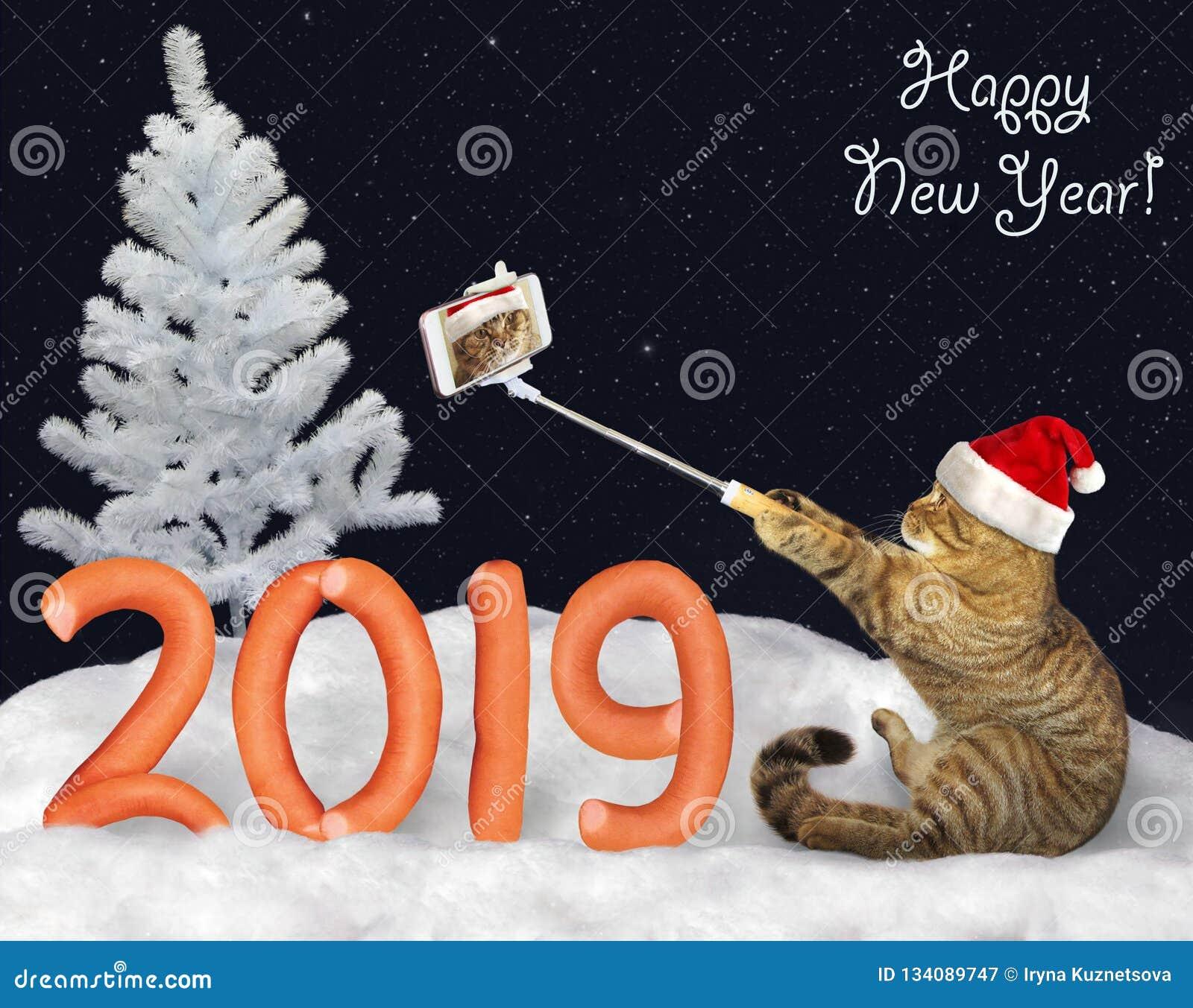 Nowego Roku 2019 kot robi selfie 3