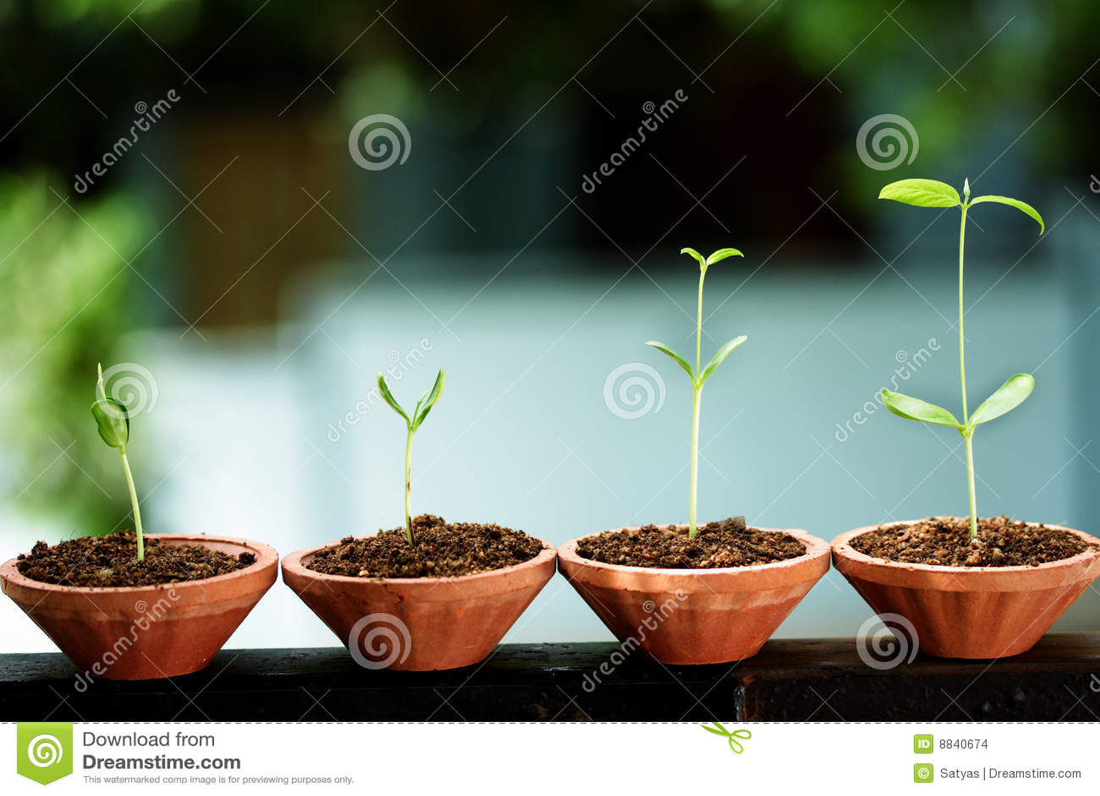 Nowi żyć saplings