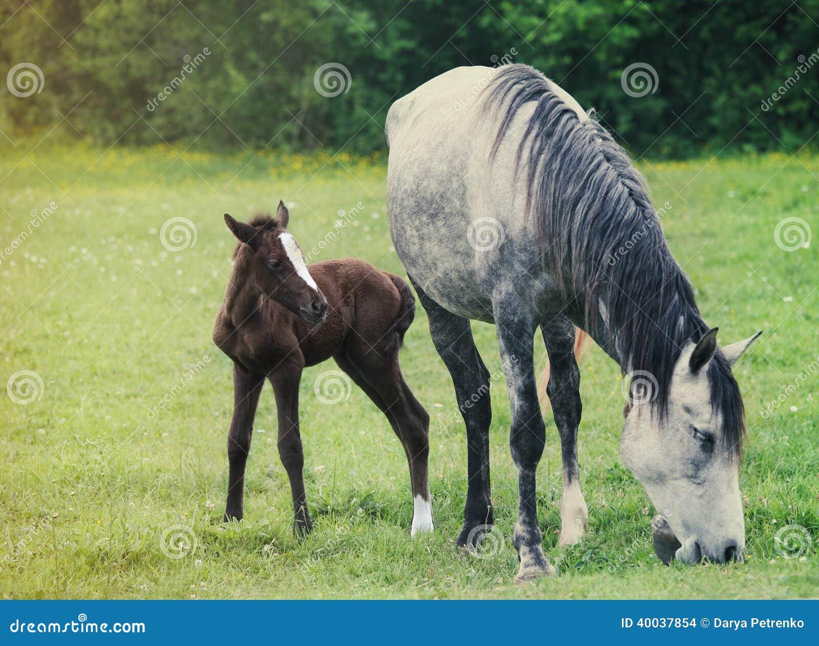 Nowonarodzony dziecko koń z matką na zielonej trawie