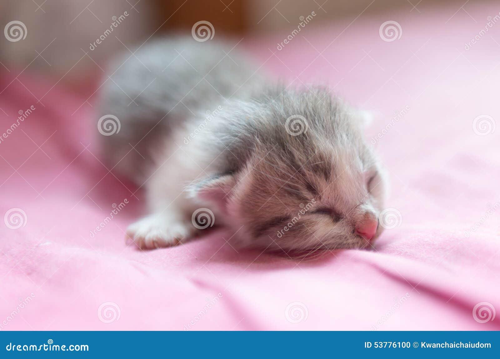 Nowonarodzony kota sen na płótnie