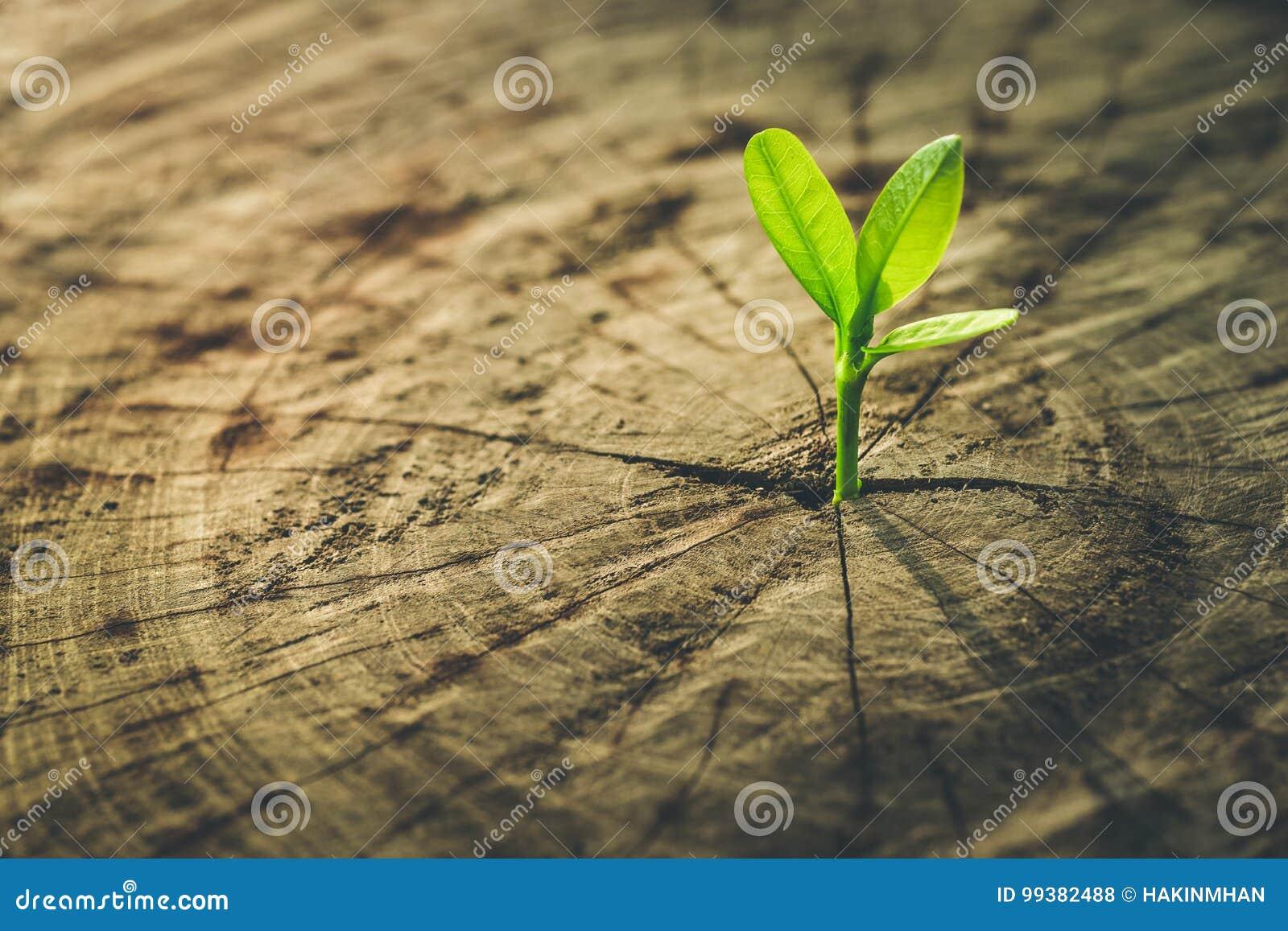 Nowy życia pojęcie z rozsadowym dorośnięcie flancy drzewem