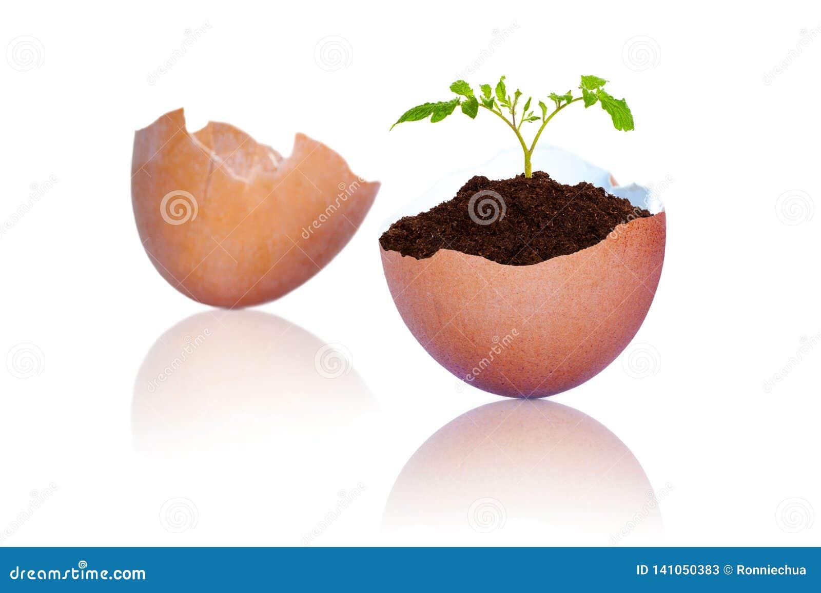 Nowy życie w roślinie R Z Krakingowych Brown Jajecznych skorup