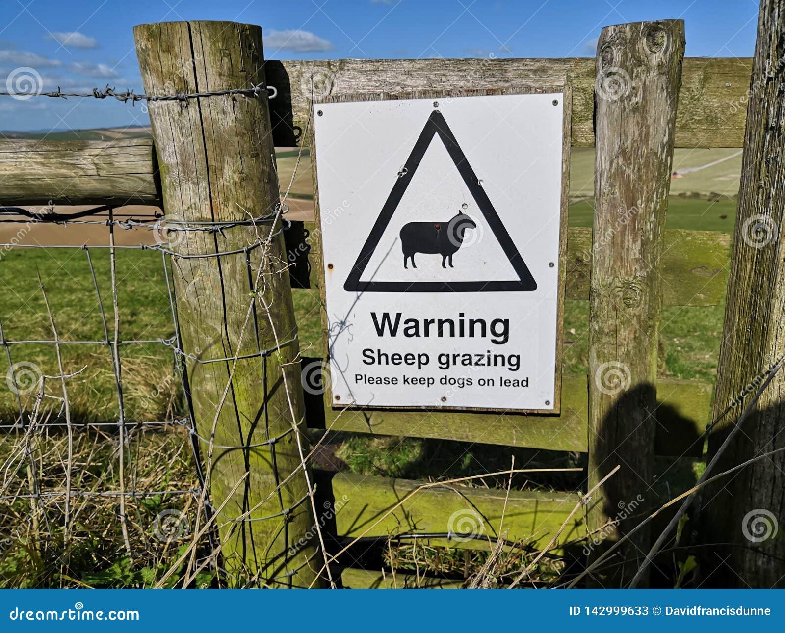 Nowy ostrzegawczy barani pasanie znak To ochrania pastwiskowych baranich baranki i radzi psich właścicieli w Sussex wzgórzach sta