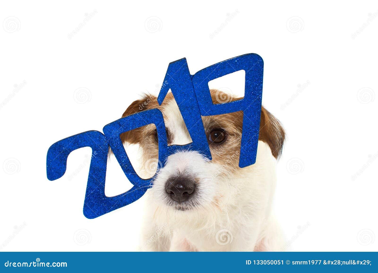 2019 nowy rok ŚMIESZNY JACK RUSSELL pies Z błyskotliwość BŁĘKITNYM tekstem G