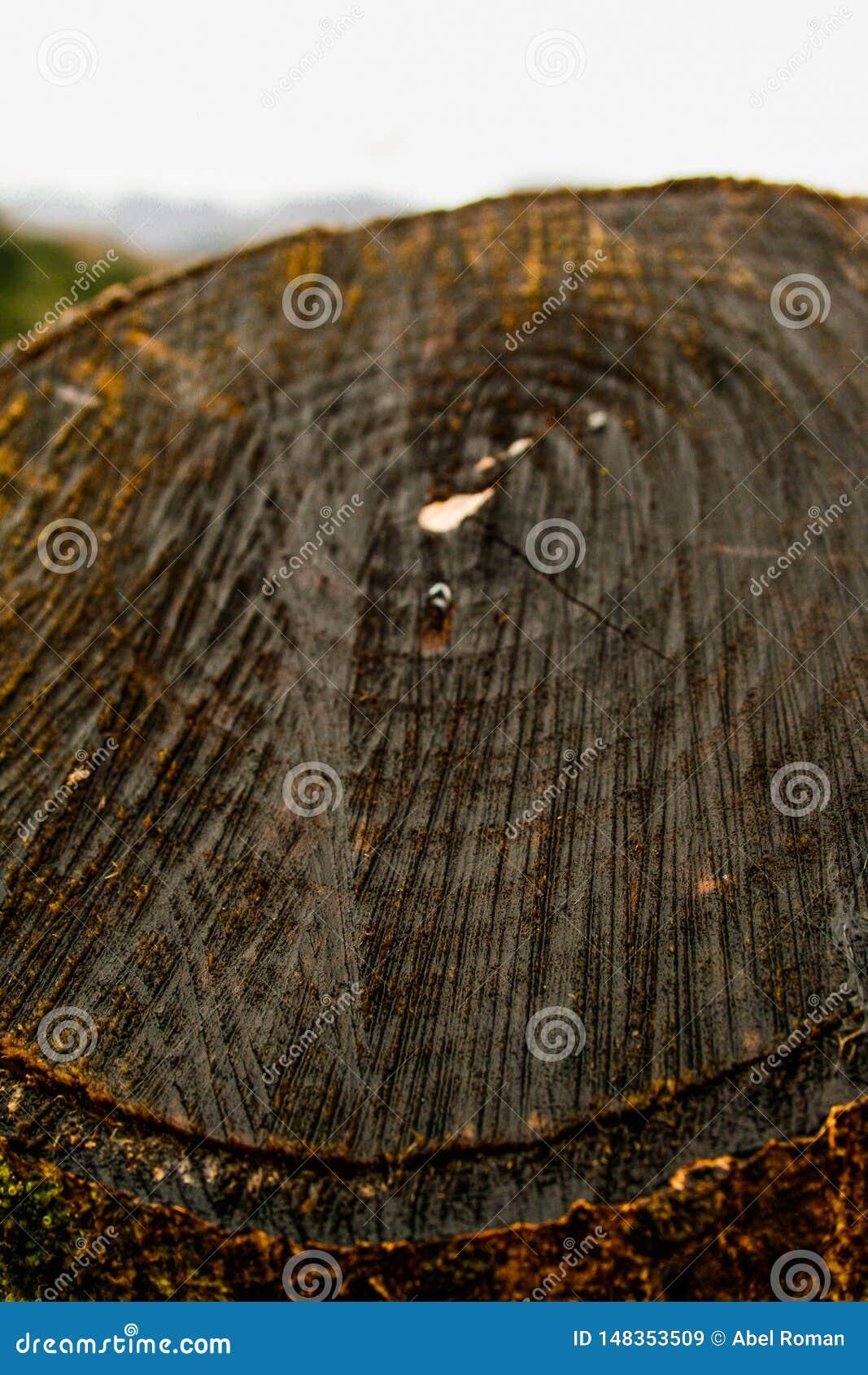 Nterior de um tronco de madeira serrilhado