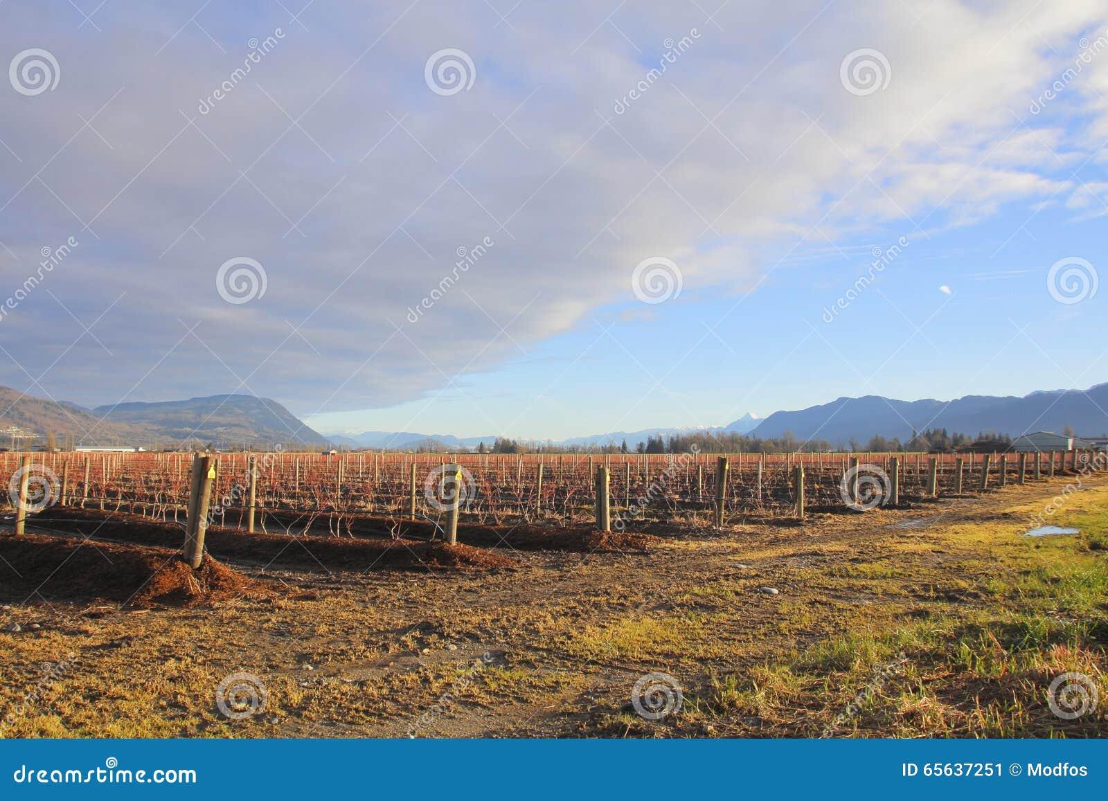 Nuages de pluie se déplaçant au-dessus de la terre agricole