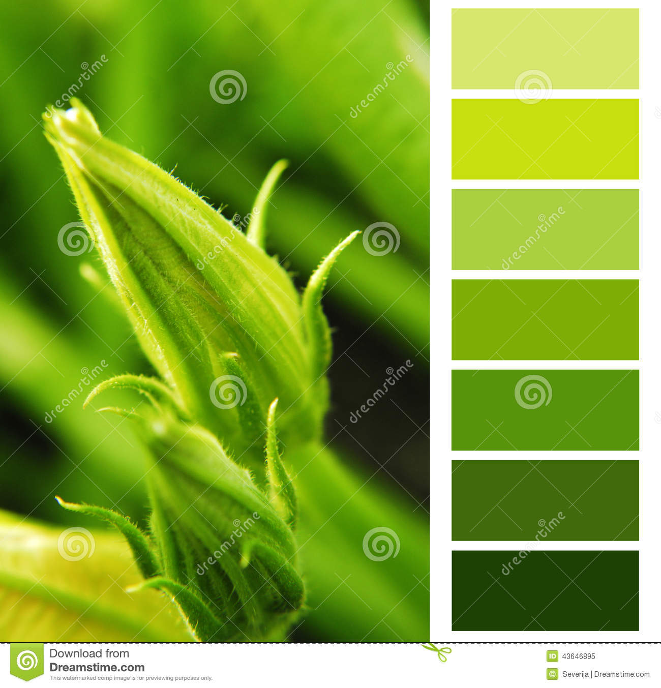 nuancier vert de courgette image stock image du palette 43646895. Black Bedroom Furniture Sets. Home Design Ideas