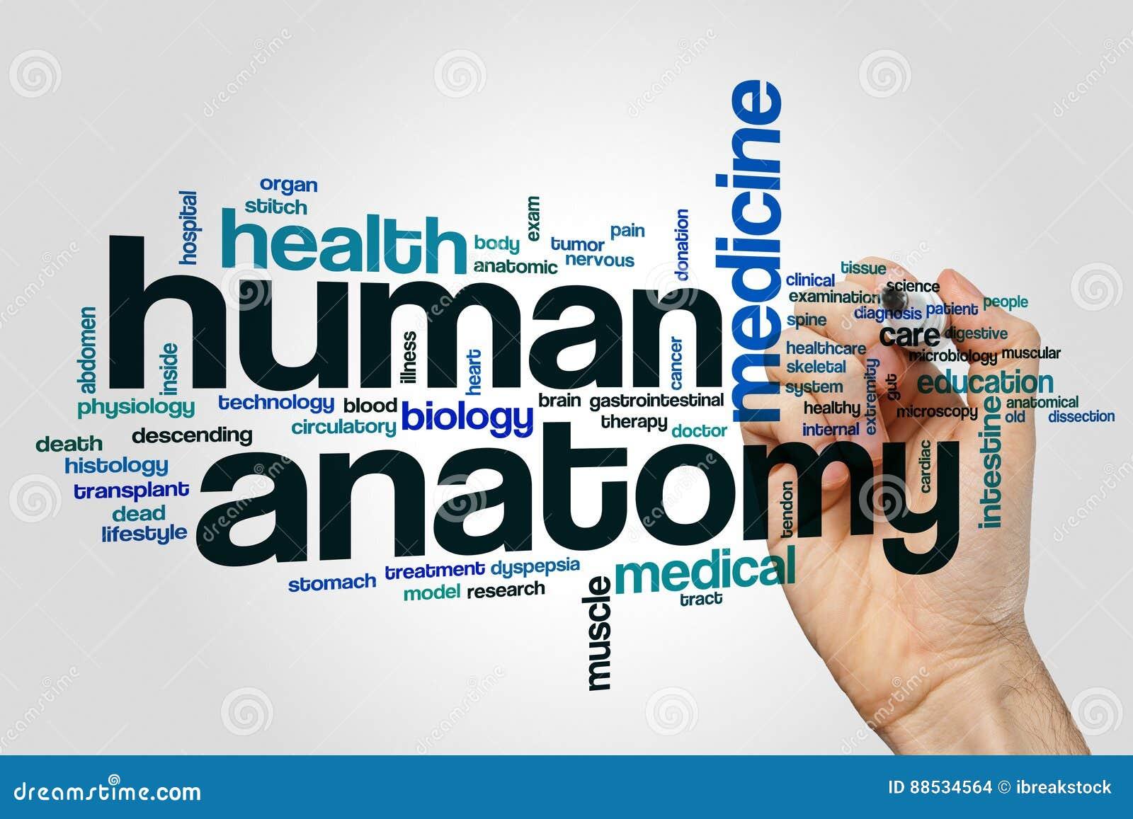 Nube Humana De La Palabra De La Anatomía Foto de archivo - Imagen de ...