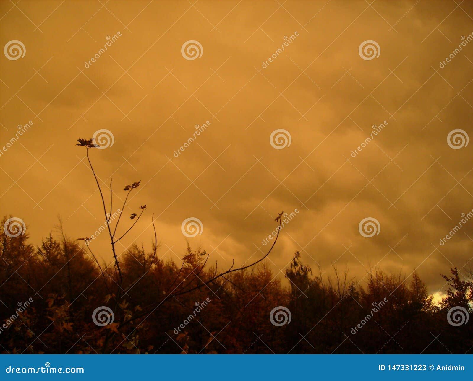 Nubes anaranjado oscuro de la lluvia, cielo louring sobre el bosque del otoño