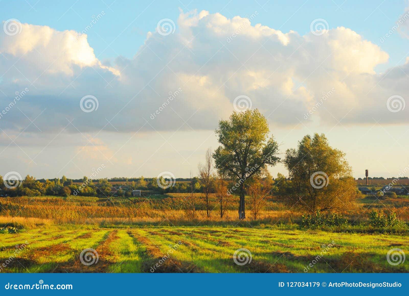 Nubes en el cielo soleado de la tarde sobre el prado con el heno biselado en líneas, álamos y campo