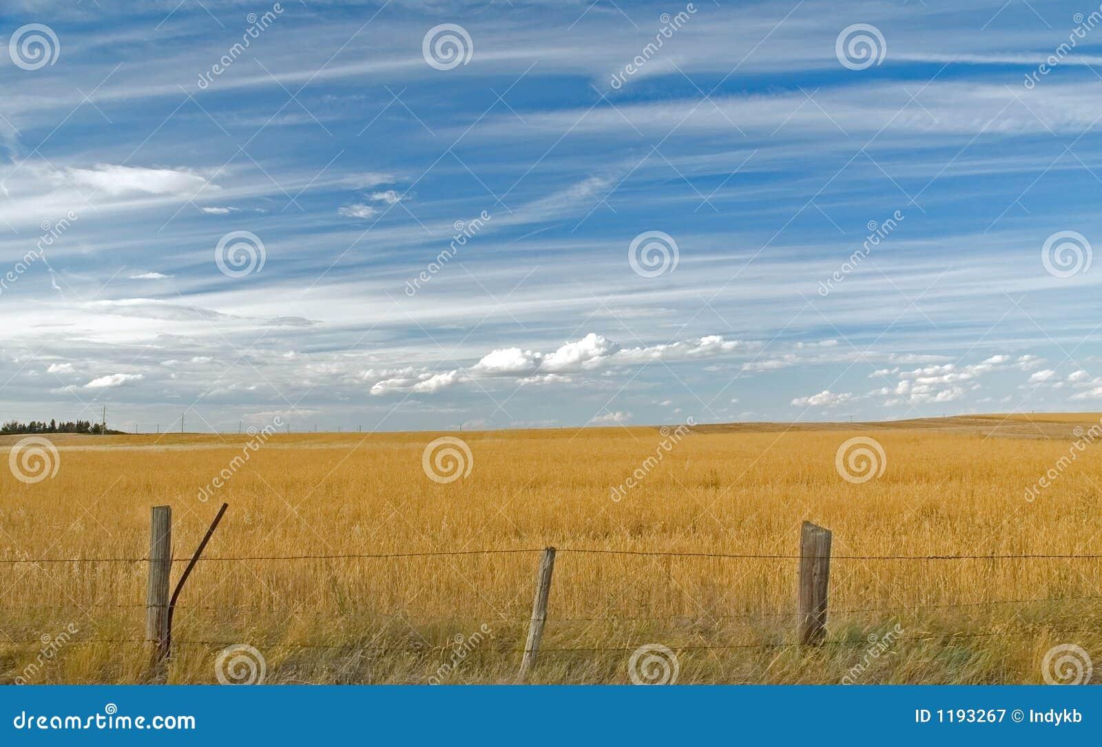 Nubes sobre el campo 7