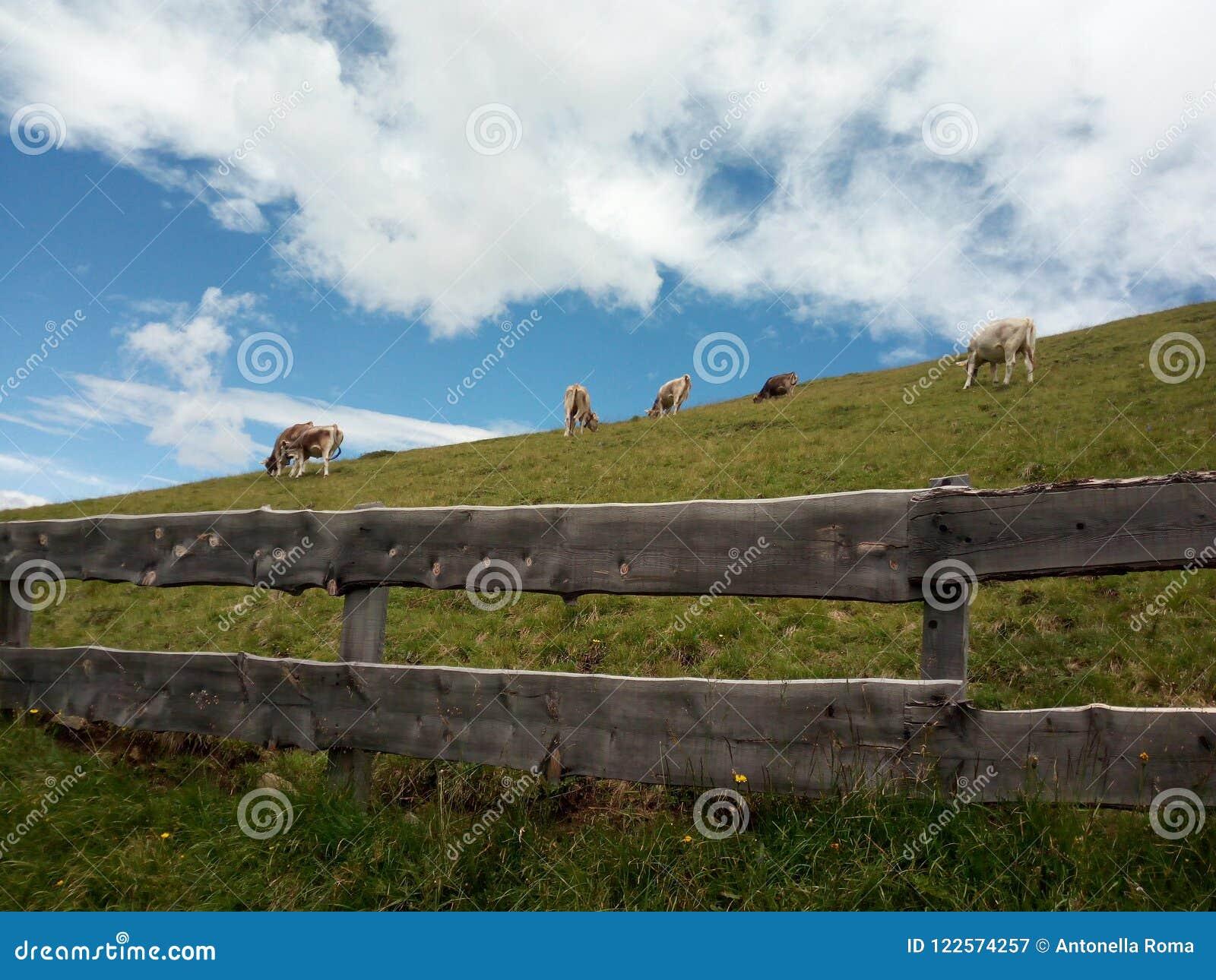 Nubes y vacas