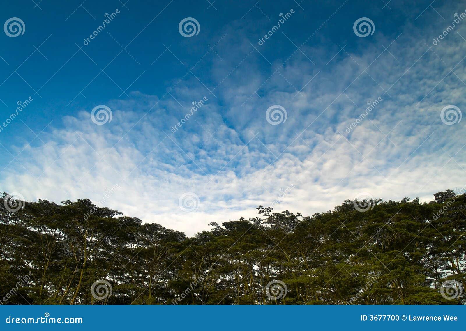 Download Nubi Sopra Le Parti Superiori Dell'albero Fotografia Stock - Immagine di denso, cumulus: 3677700