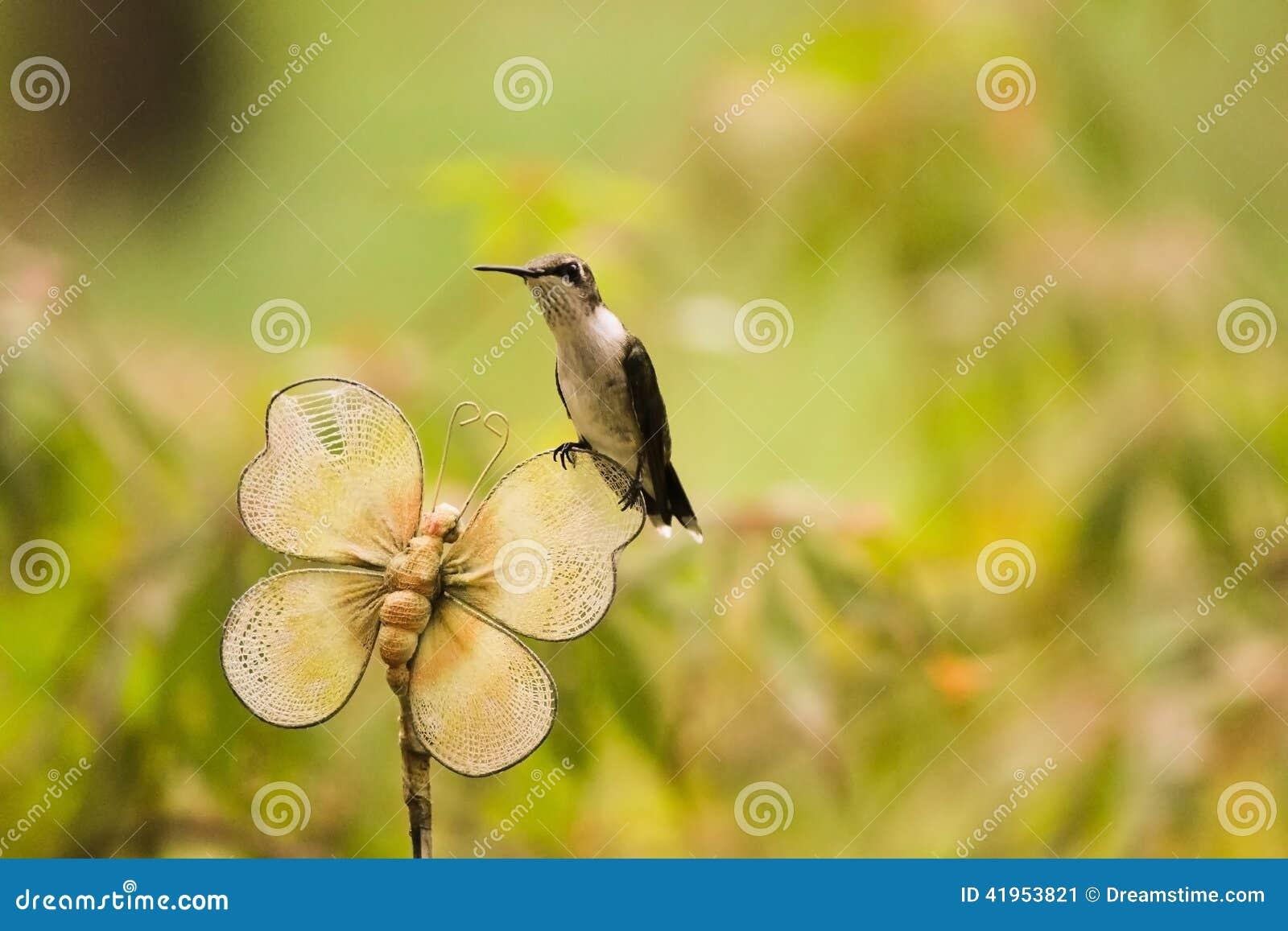 Nucić ptaka Na Ogrodowym elemencie wyposażenia