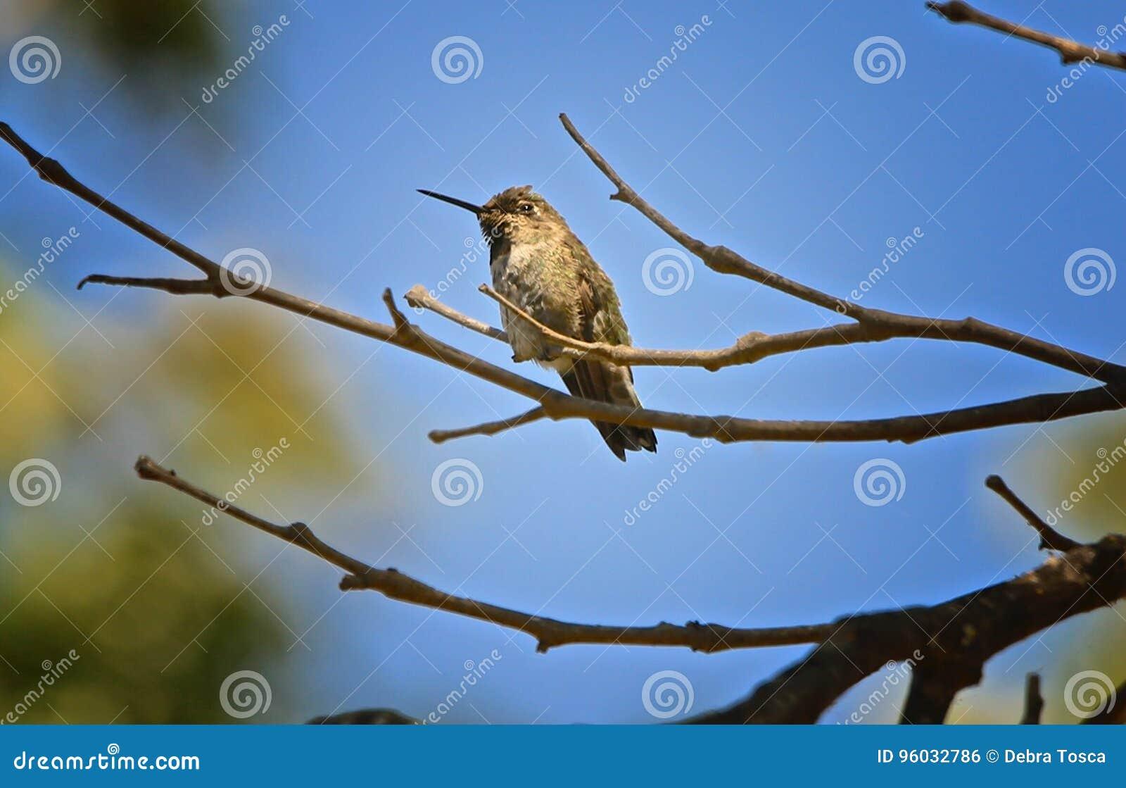 Nucić Ptasią gałąź