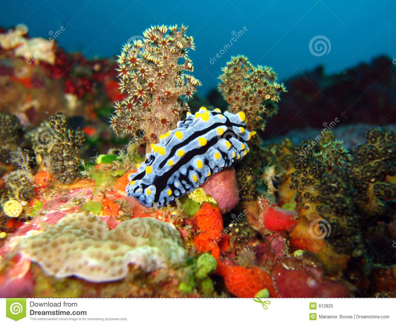 Nudi in a soft coral forest