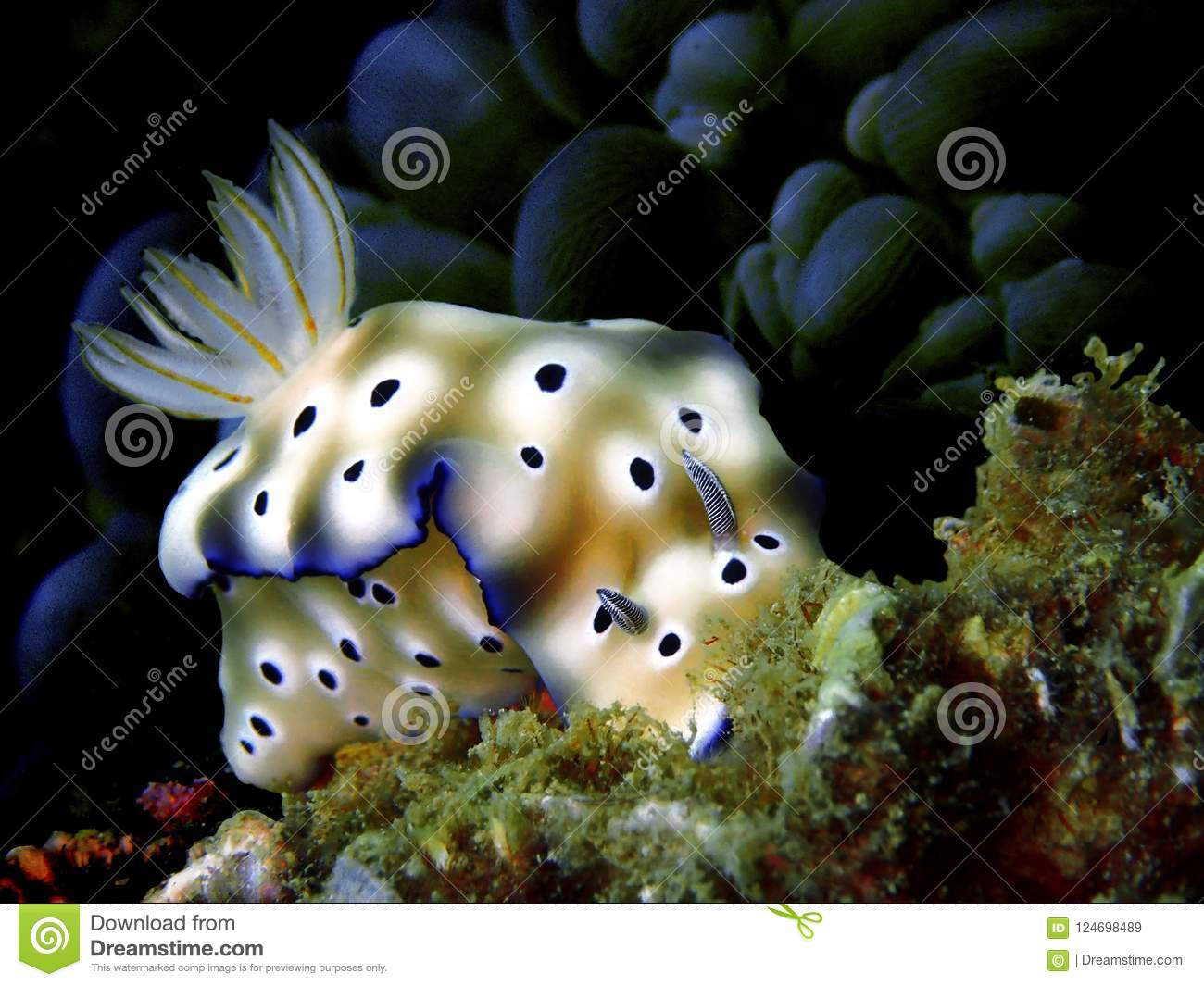 Nudibranchs, kind of like a sea slug, come in virtually every color and combination of colors and are extremely beautiful