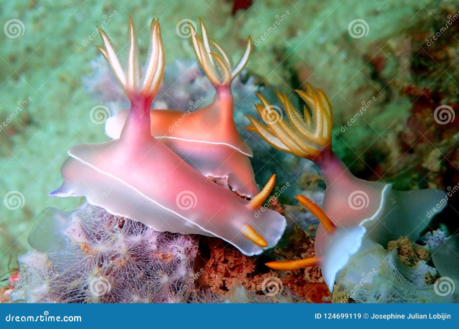 Nudibranchs, soort gelijkaardig een overzeese naaktslak, komt in vrijwel elke kleur en combinatie kleuren en is uiterst mooi