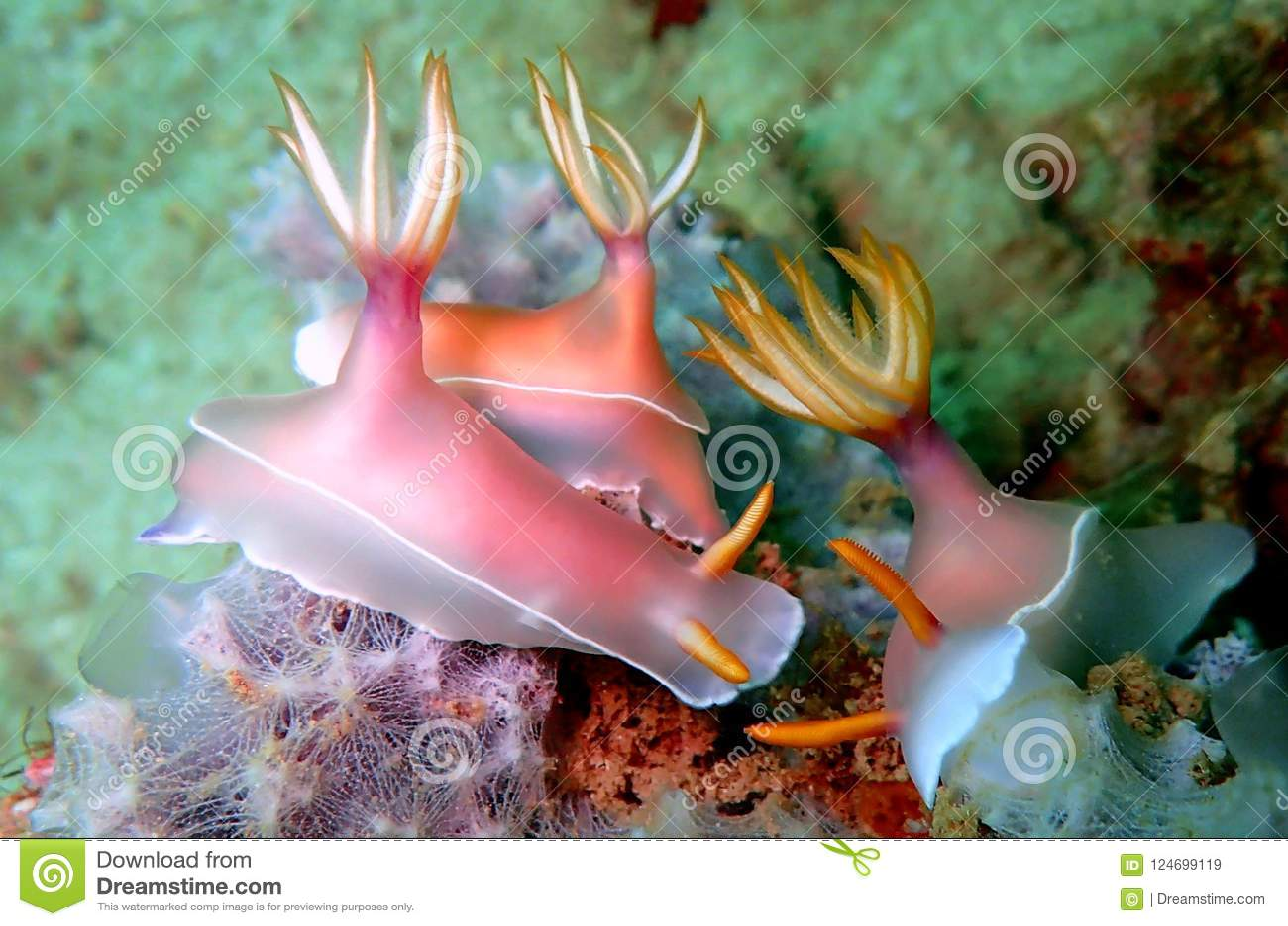Nudibranchs, un poco como una barra de mar, viene en virtualmente cada color y combinación de colores y es extremadamente hermoso