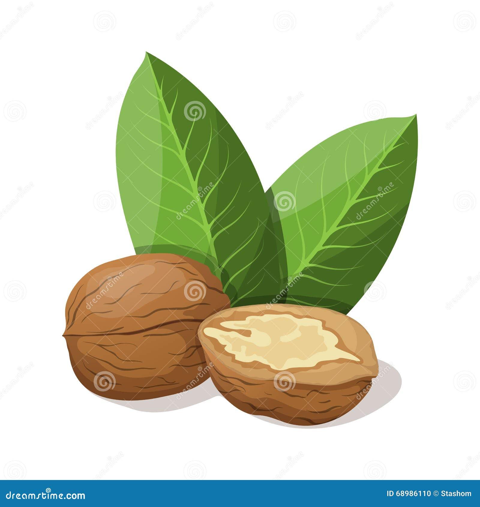 Nueces con las hojas en blanco