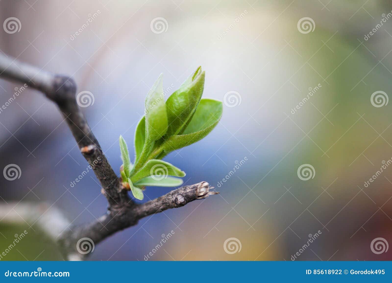 Nueva hoja del verde del concepto de la vida y rama de árbol quebrada concepto de la naturaleza del tiempo de primavera foco suav