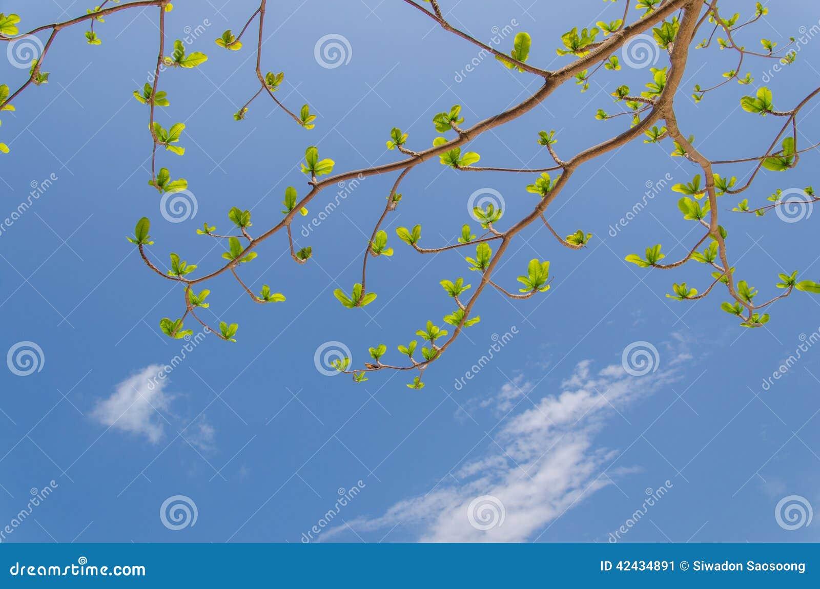 Nuevas hojas que crecen en fondo brillante del cielo azul