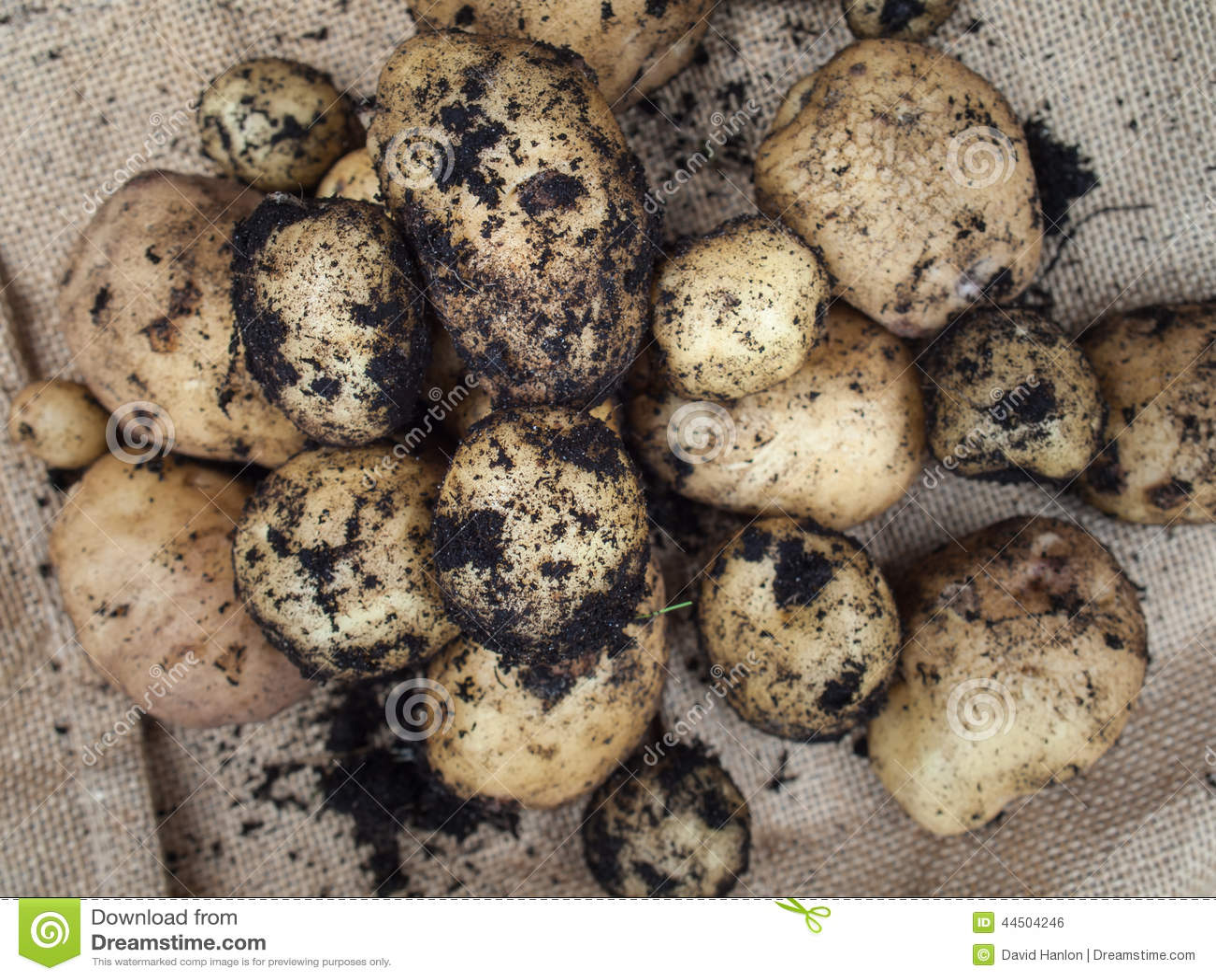 Nuevas patatas frescas