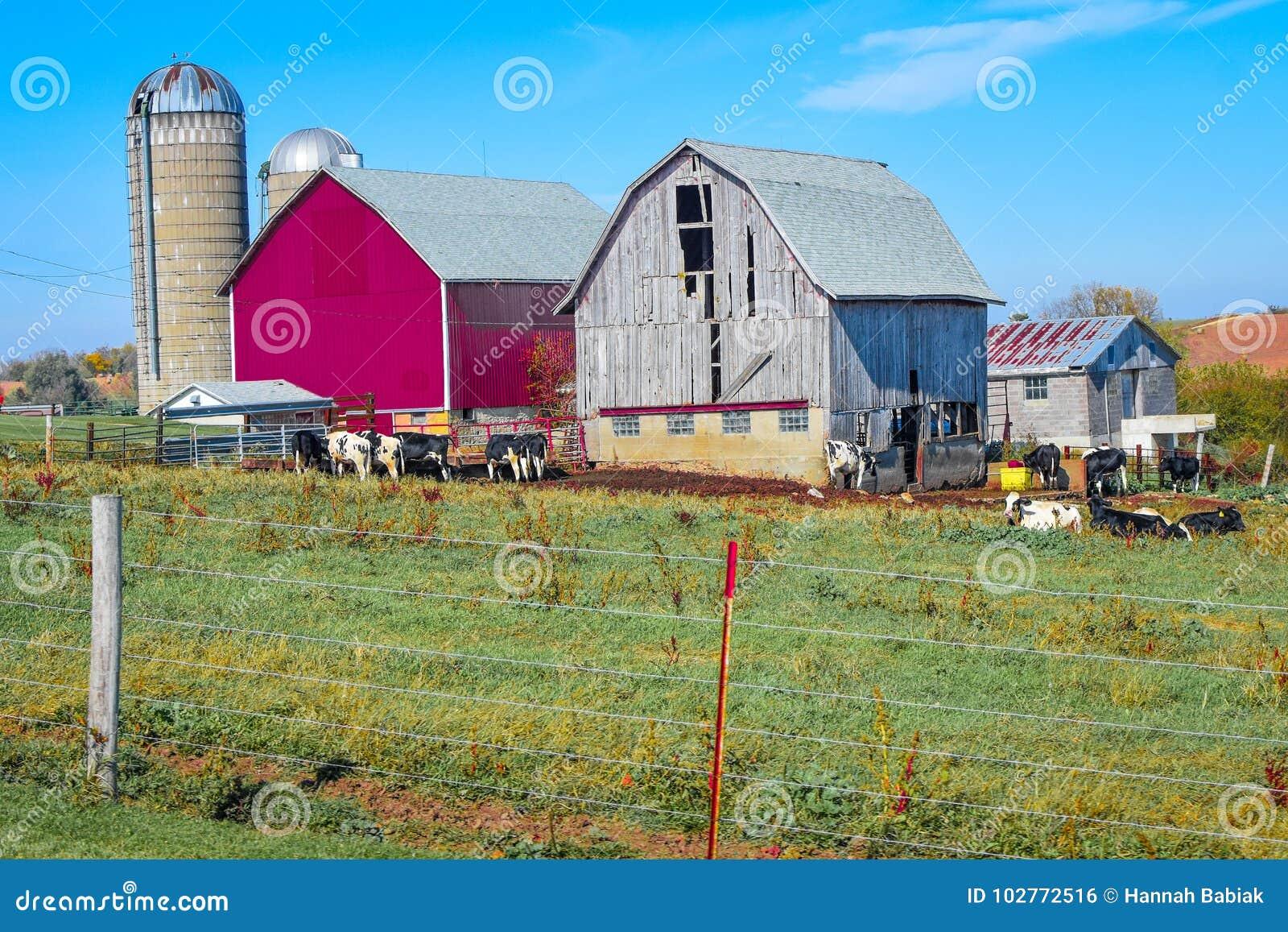 Nuevo granero y granero viejo en una granja de Wisconsin