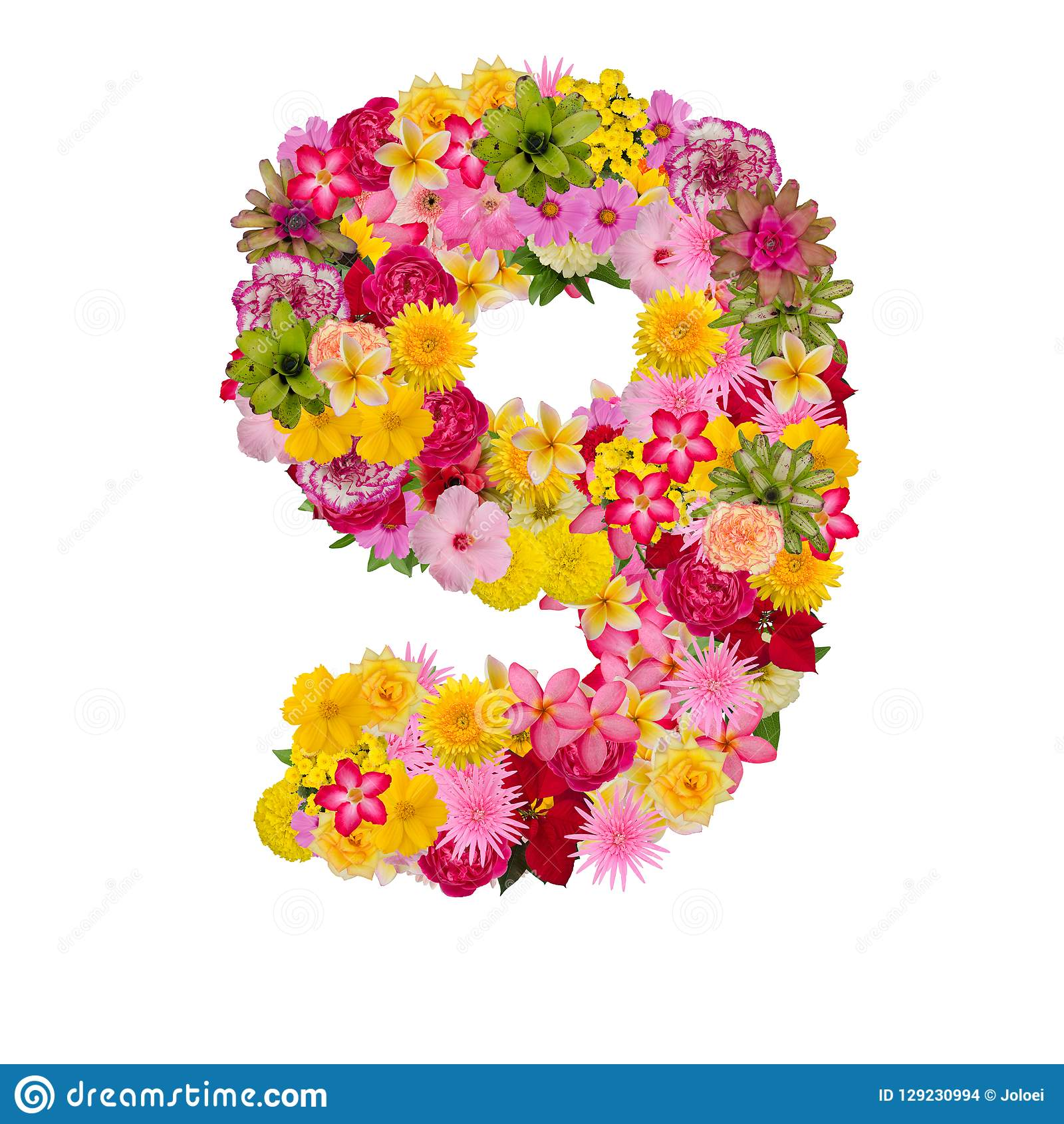 Number 9 Made From Flower Isolated On White Background Whit Clipping Path