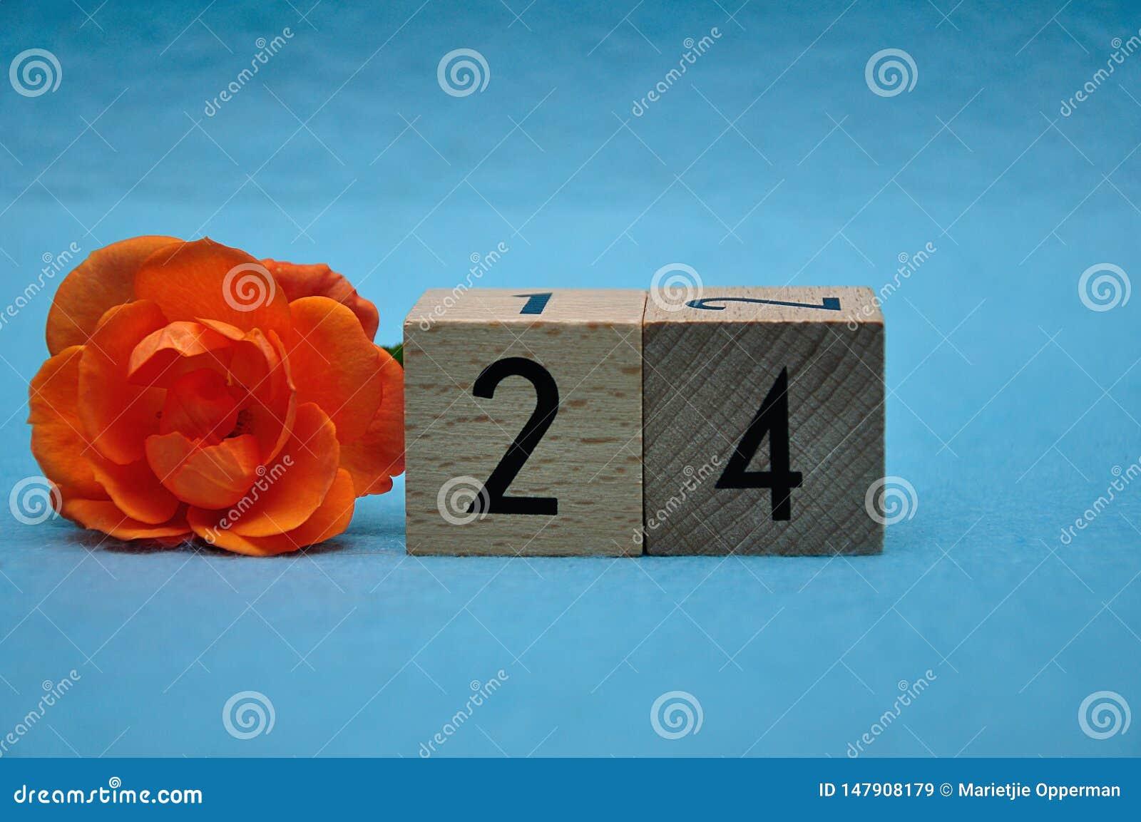 Number twenty four with an orange rose