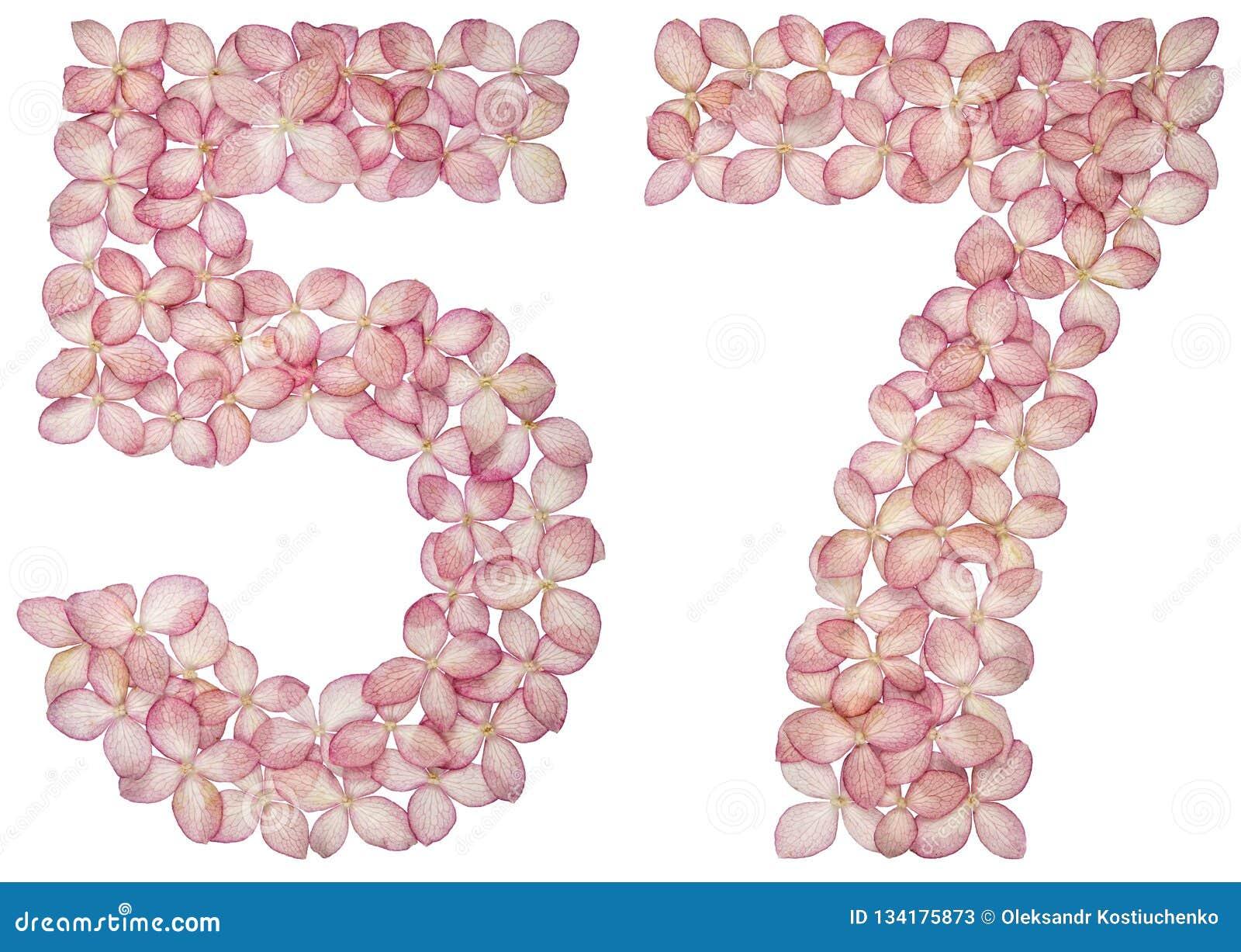 Numeral árabe 57, cinquenta e sete, das flores da hortênsia, isoladas no fundo branco
