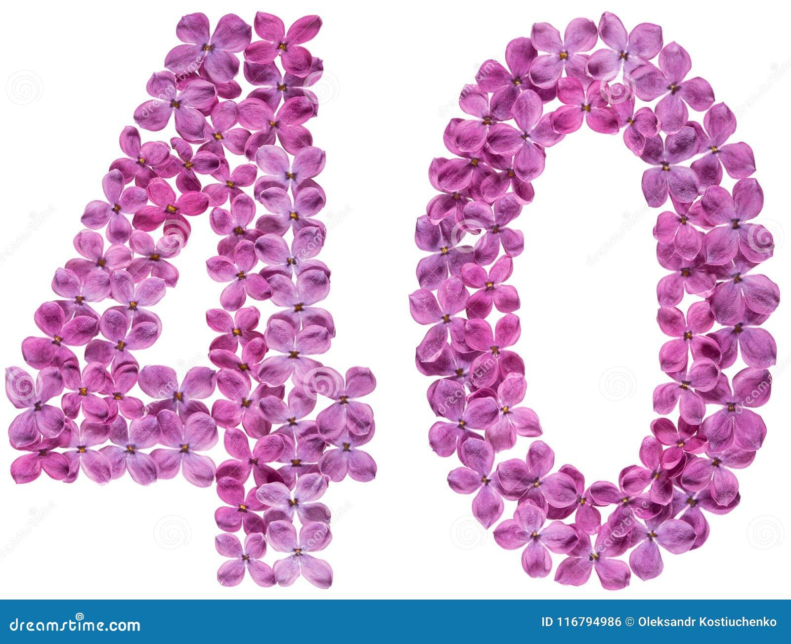 Numeral árabe 40, quarenta, das flores do lilás, isoladas no whi