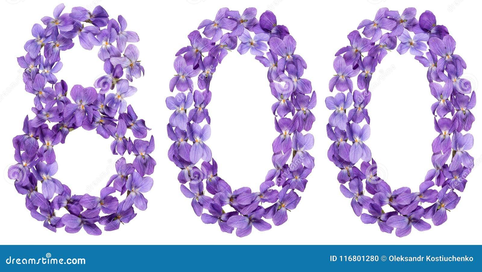 Numero arabo 800, ottocento, dai fiori della viola, isolat