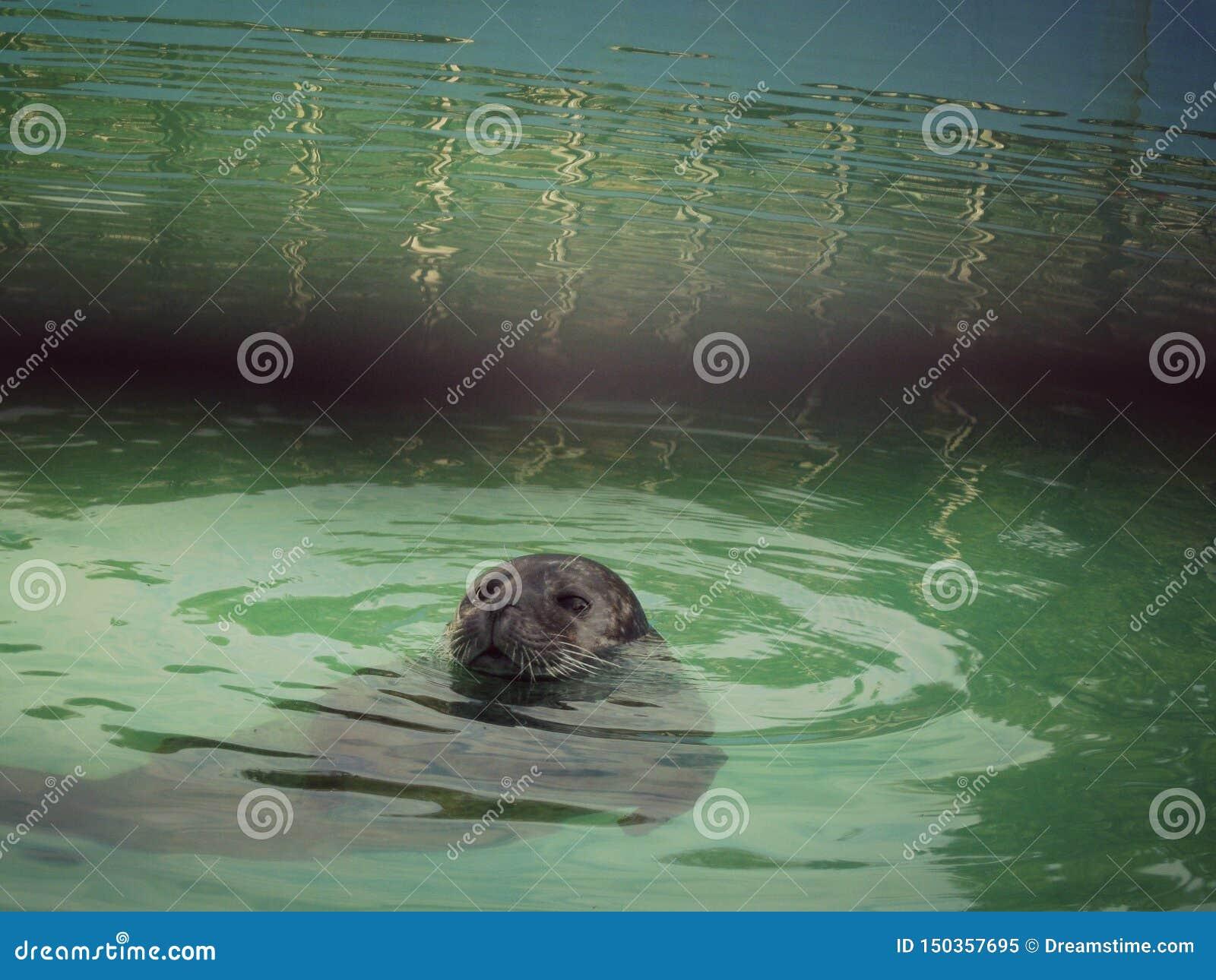 Nuotata di Cutie