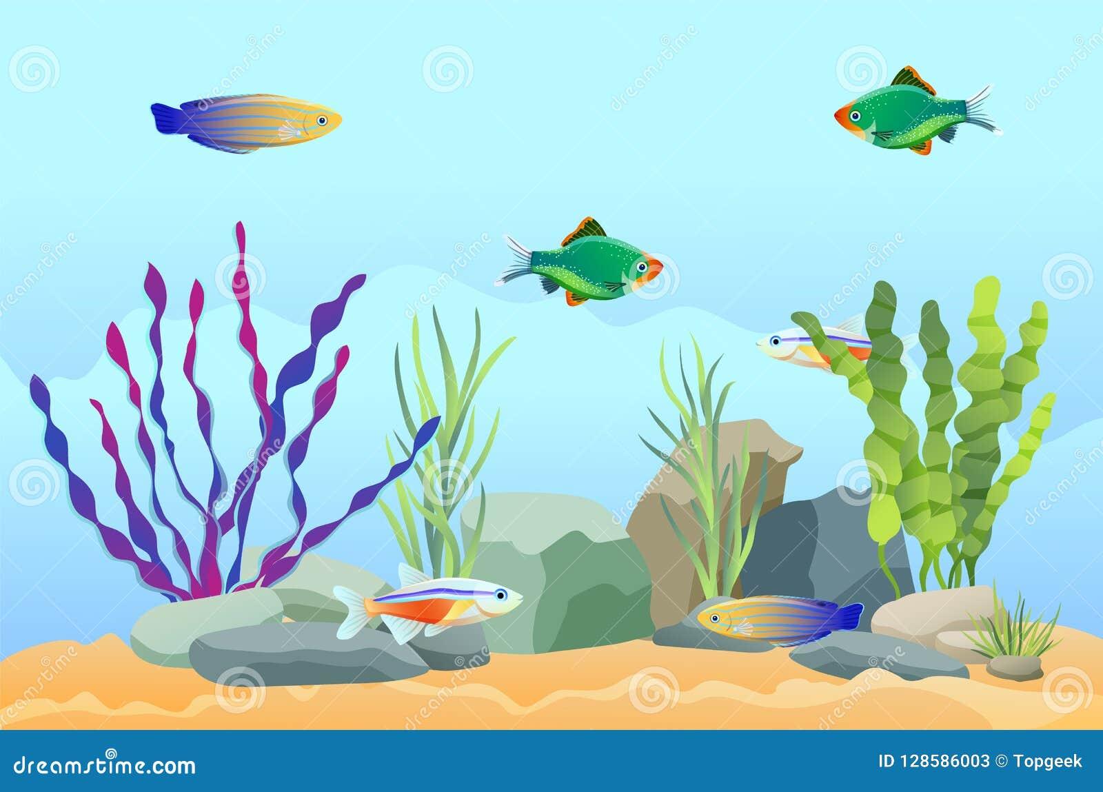 Nuoto del pesce dell acquario fra le pietre e l alga