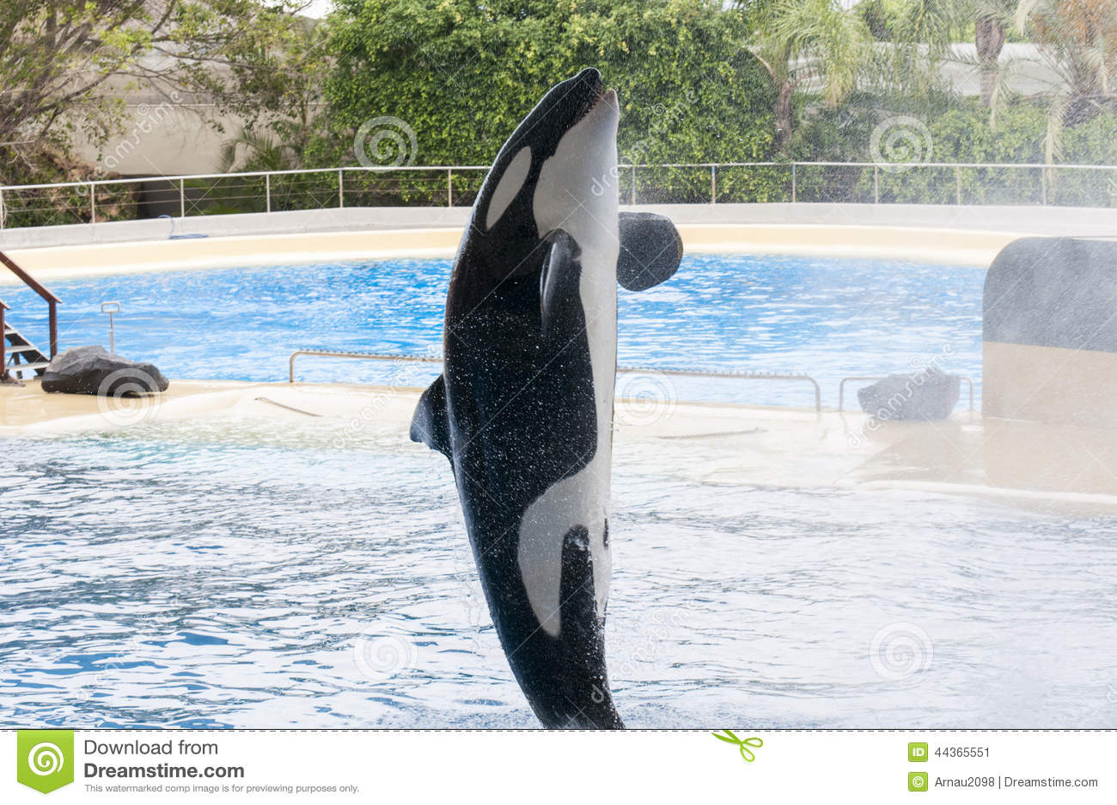 Nuoto dell orca