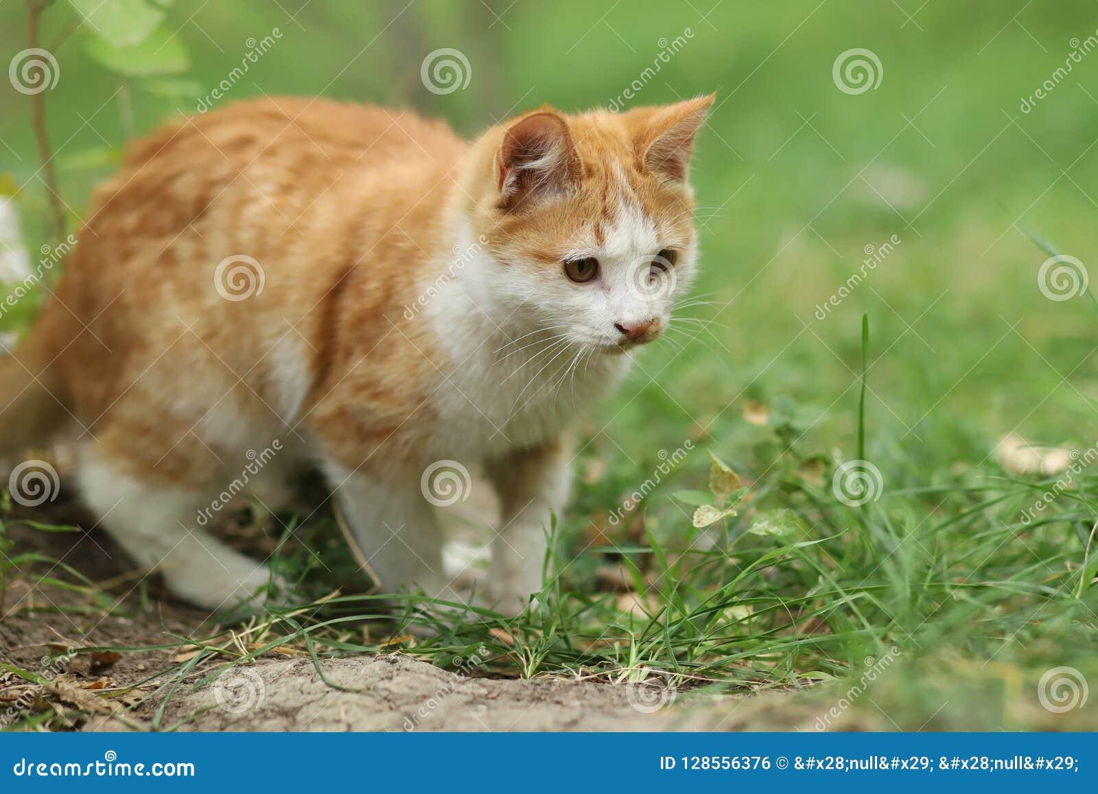2018 nuova foto, gatto adorabile del randagio di giallo